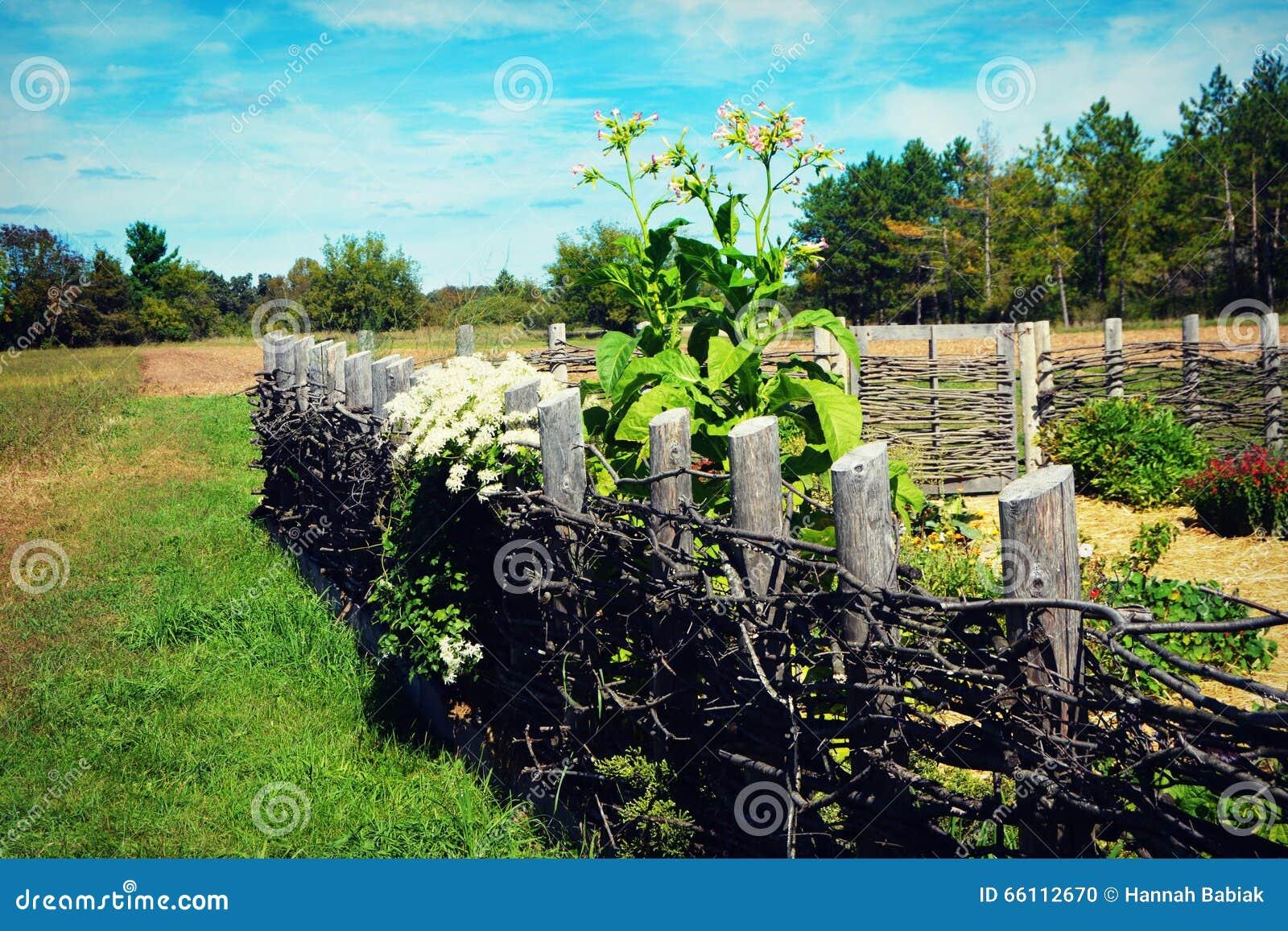 Homemade Fence stock photo  Image of gardening, garden