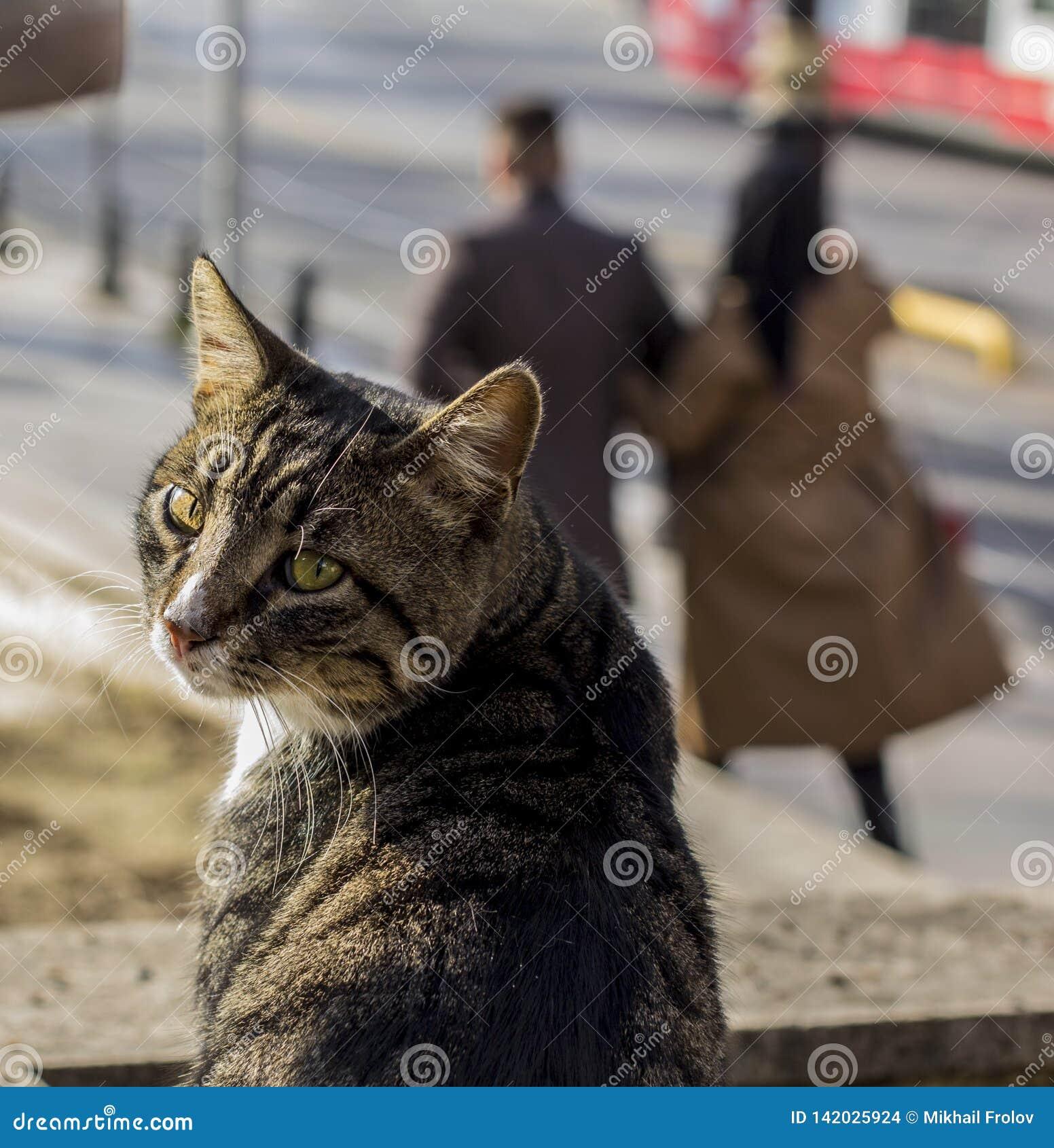 Homless katt som vänds och ses suddighet bakgrund
