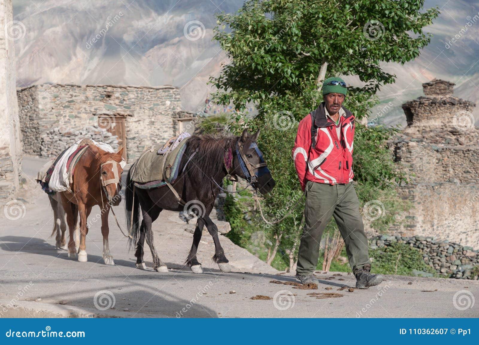 Homme avec des chevaux, villageois dans la région de montagne d Inde de Ladakh