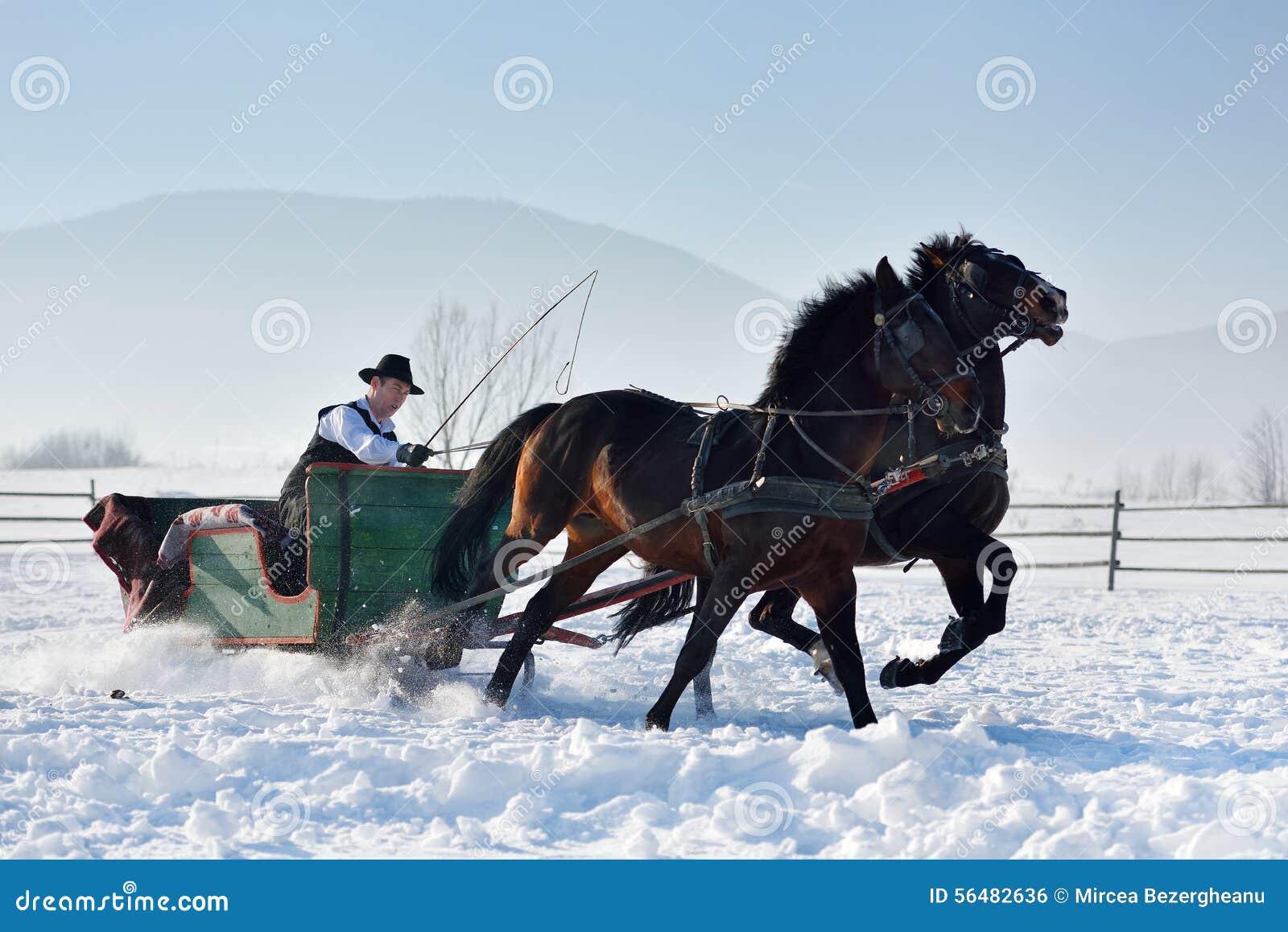 Homme avec le traîneau tiré par des chevaux