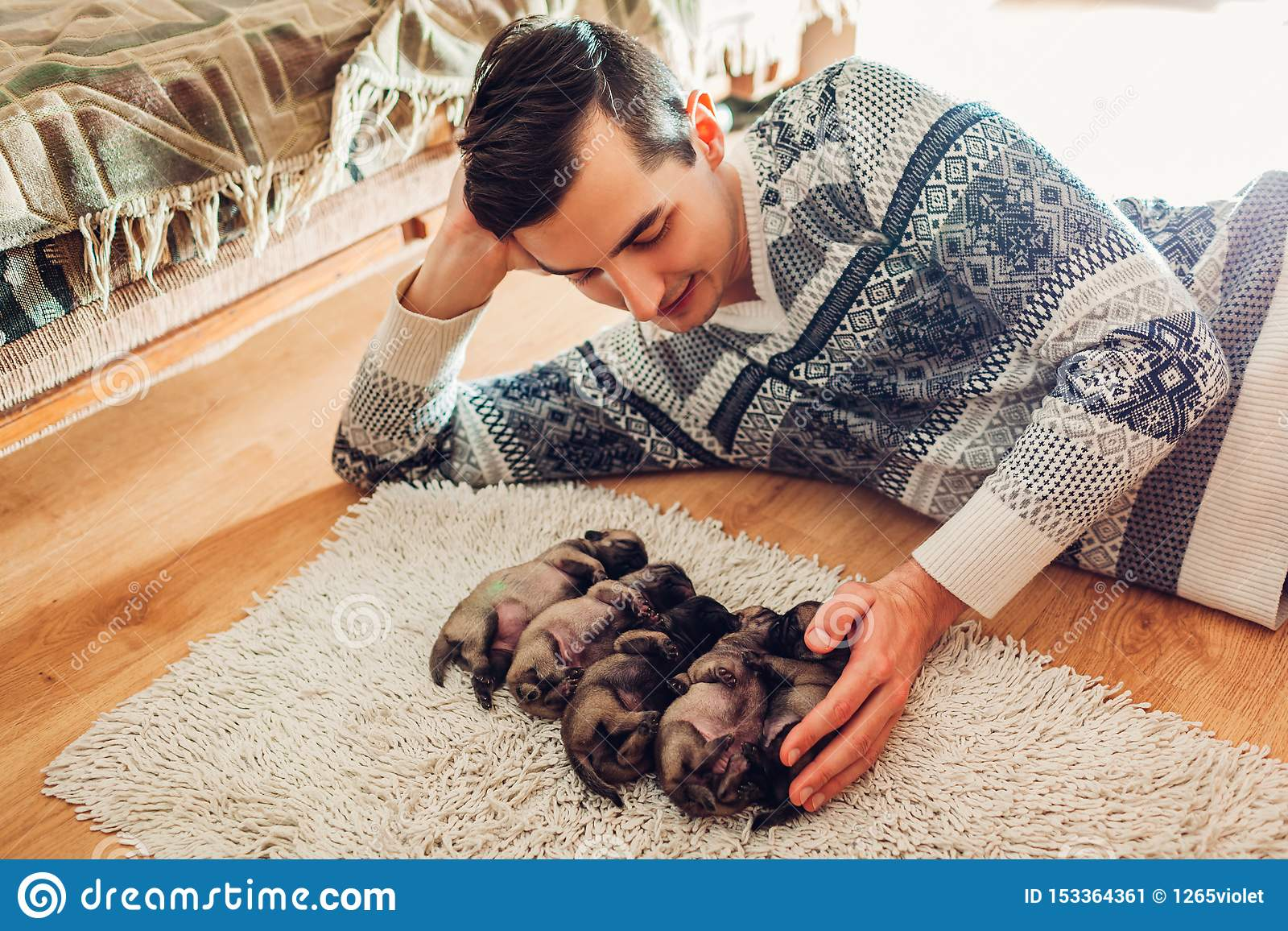 Homme comptant cinq chiots de chien de roquet dormant sur le tapis ? la maison Peu chiots se trouvant ensemble sur leurs dos