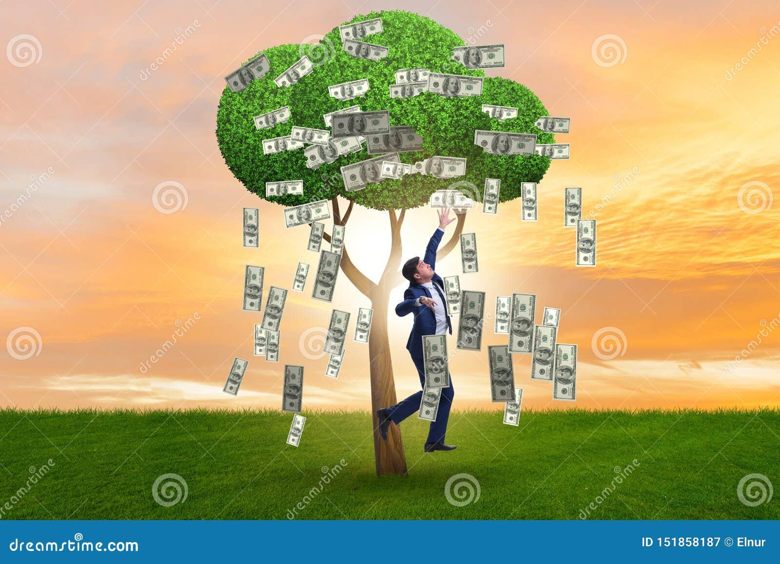 Homme d affaires avec l arbre d argent dans le concept d affaires