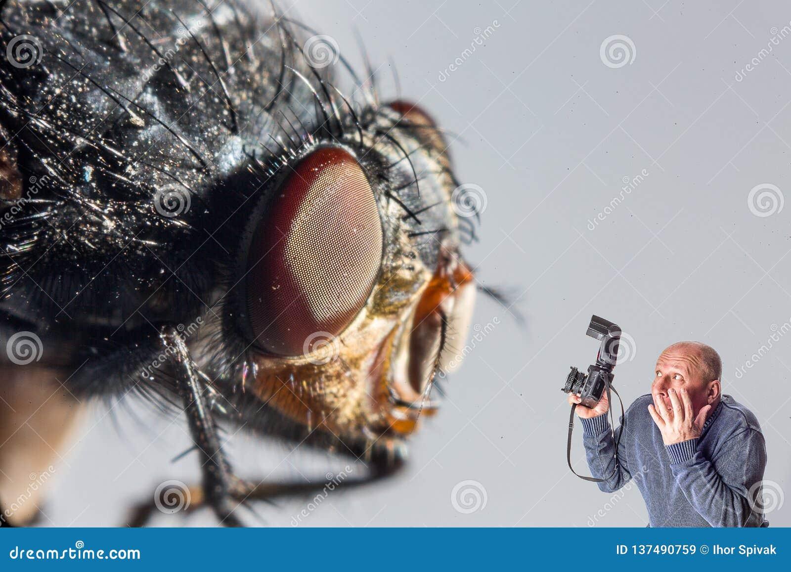 Homme de collage d art avec la caméra effrayée de la mouche géante