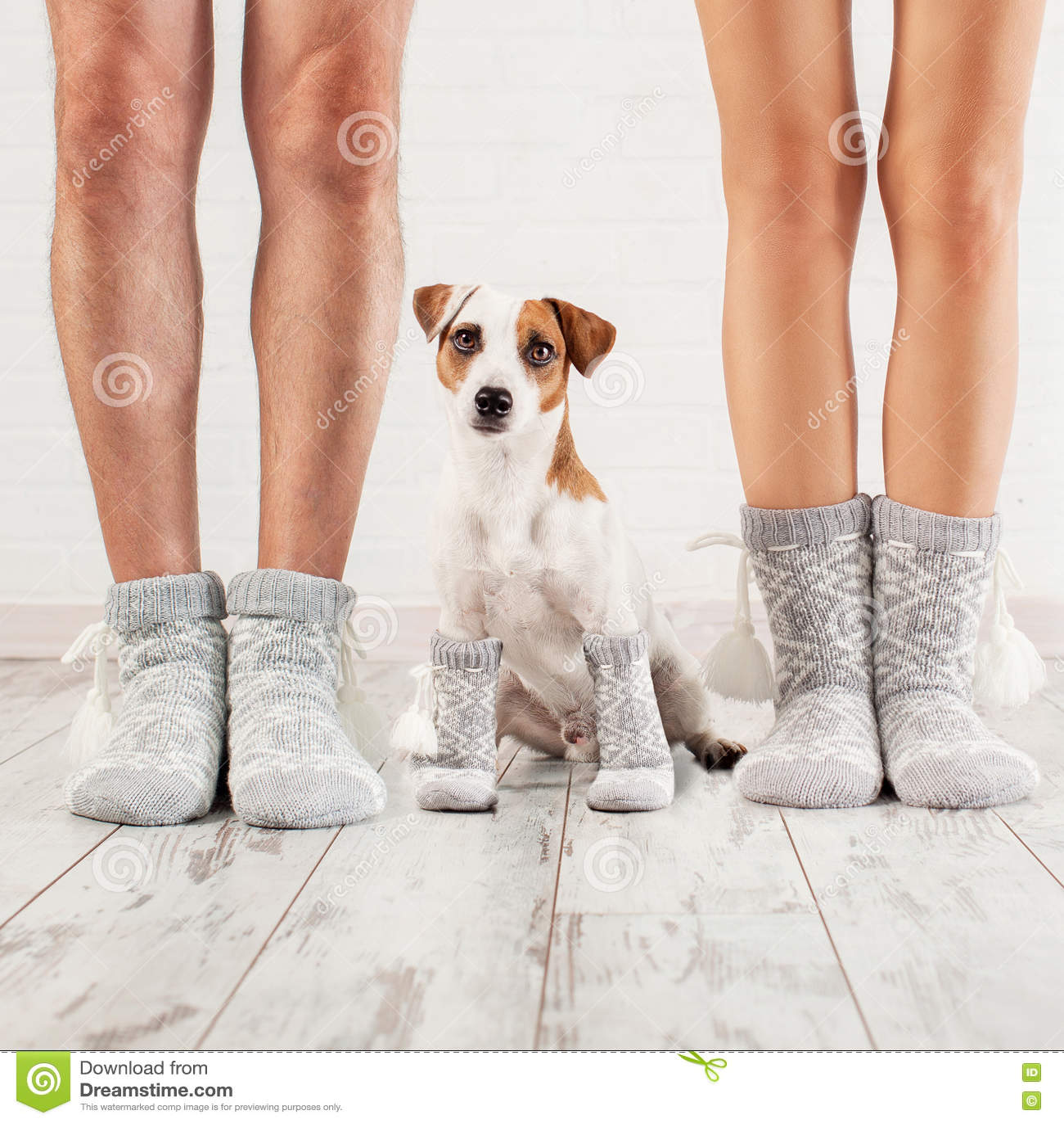 b4dd2eab00342 Homme, femelle et chien dans les chaussettes Maison familiale chaude  d'habillement
