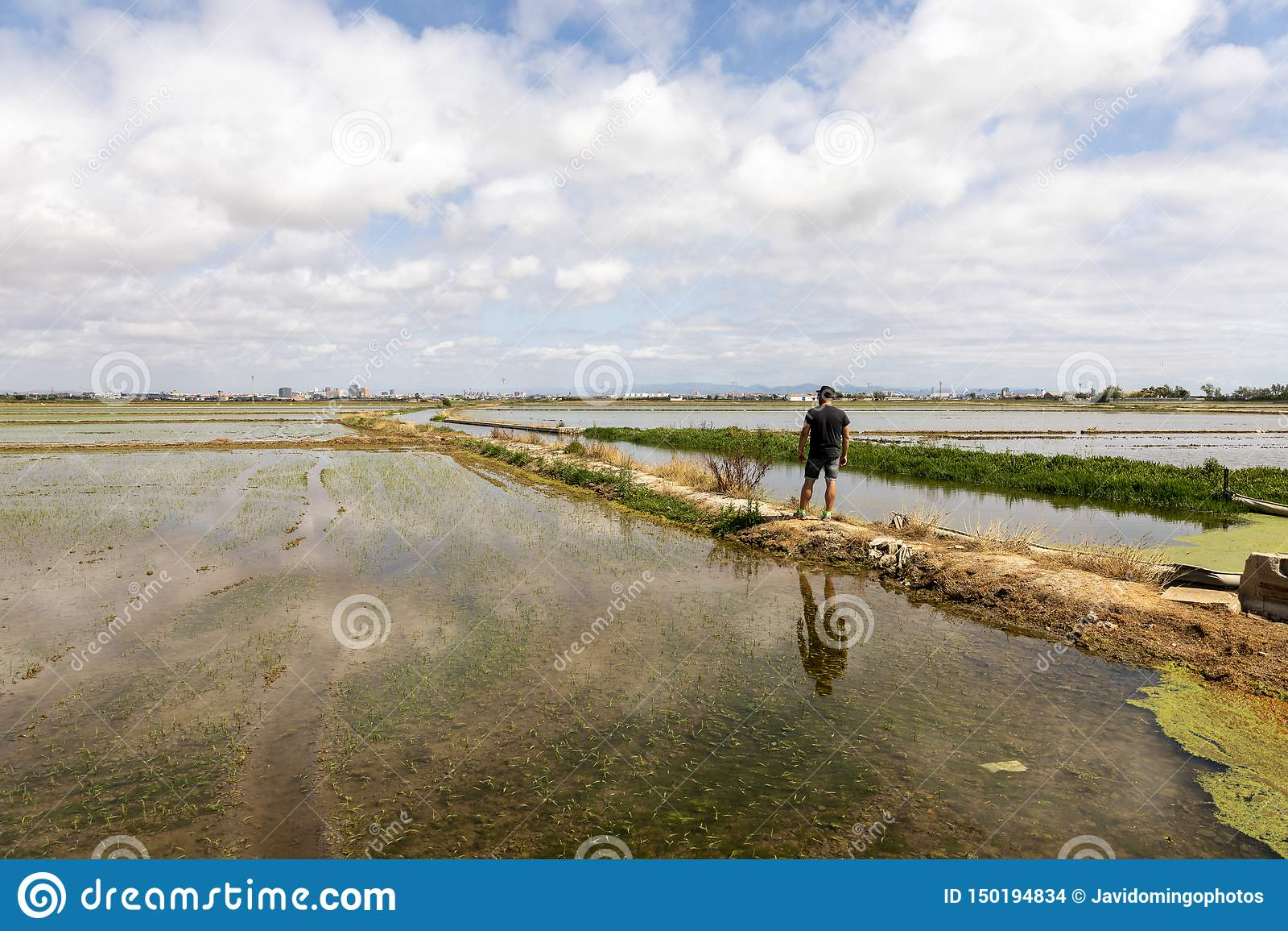 Homme observant les gisements de riz près de Valence