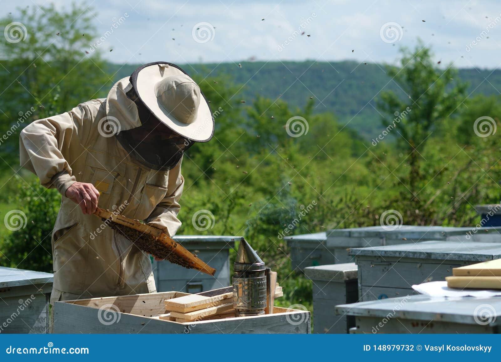 Homme tenant un nid d abeilles compl?tement des abeilles Apiculteur dans les v?tements de travail protecteurs inspectant le cadre