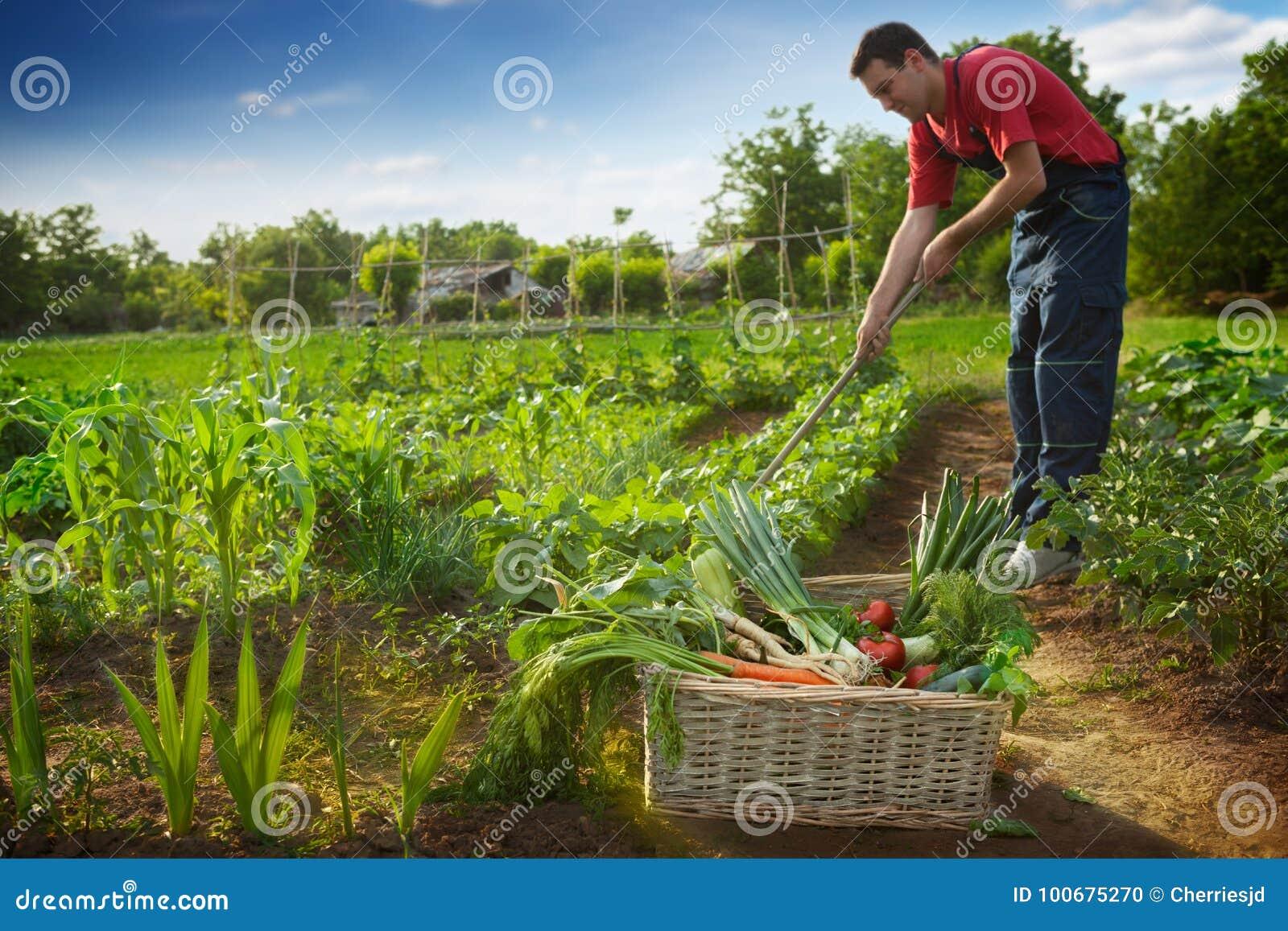 Homme travaillant dans le jardin photo stock image du for Dans le jardin