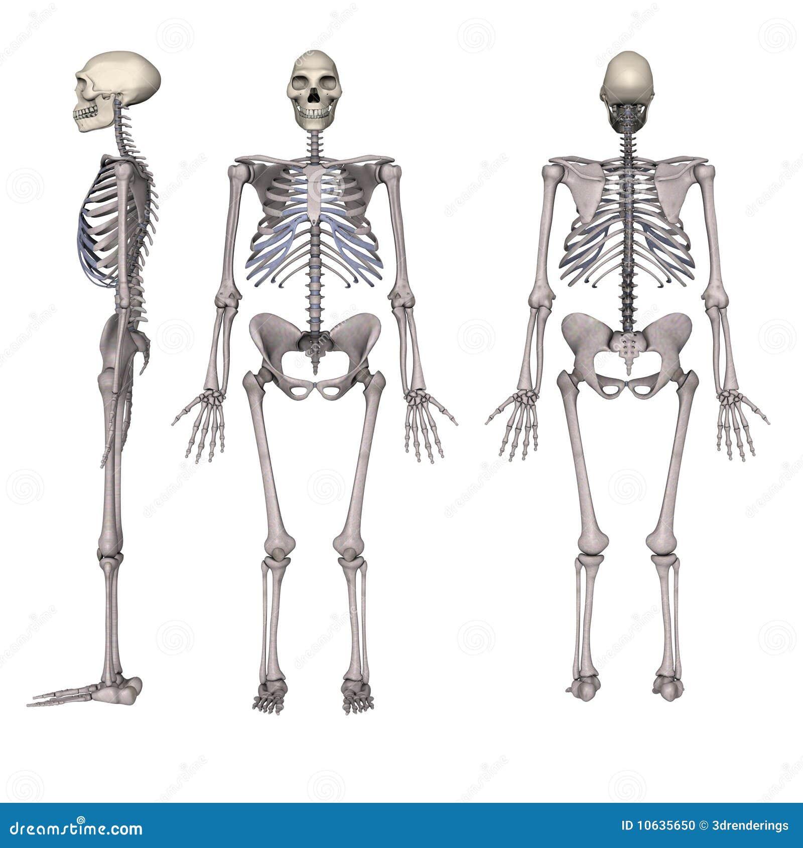 Neanderthal M