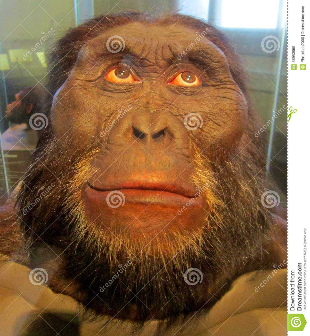 Homosapien Editorial Stock Image - Image: 56953959