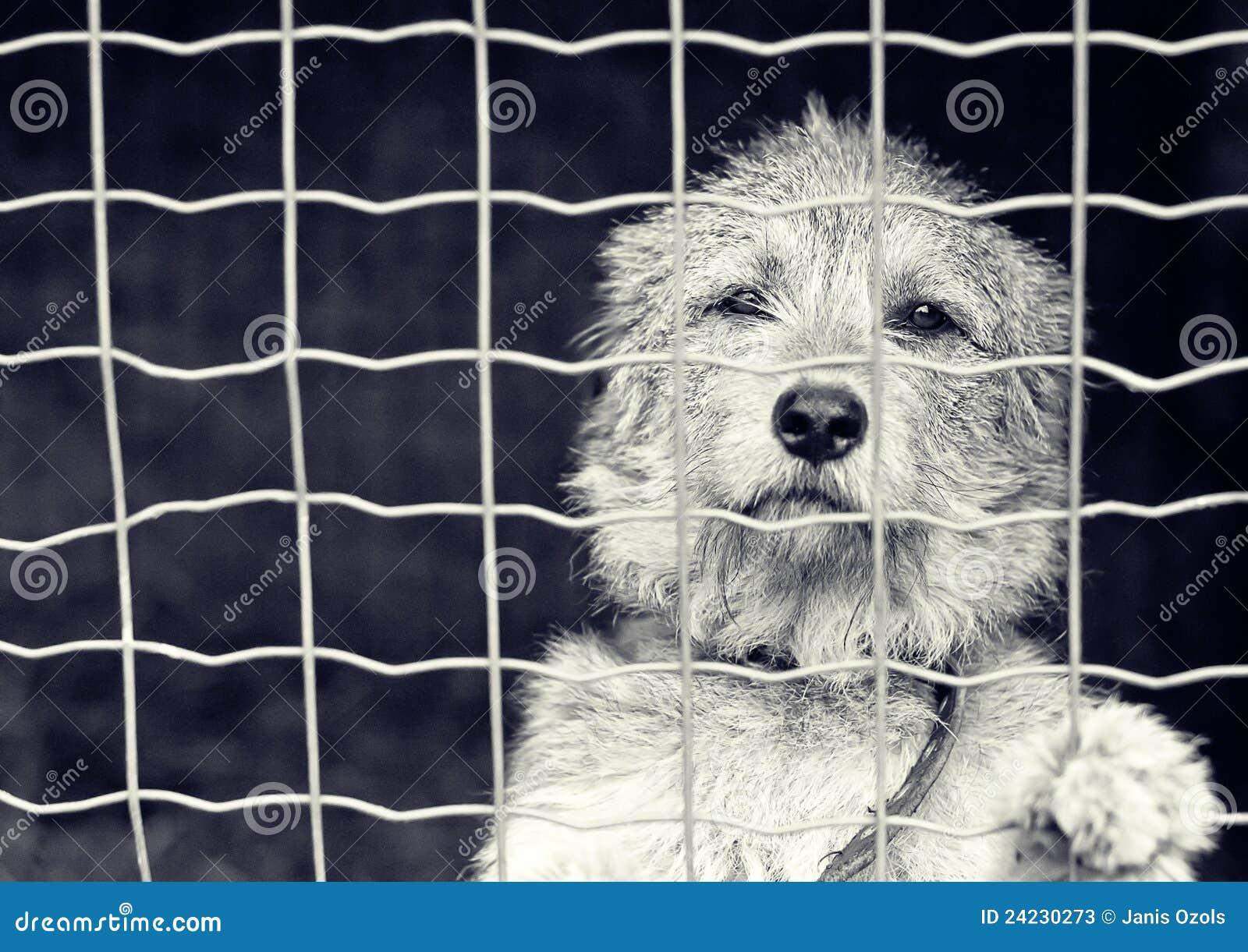 Hond achter een omheining