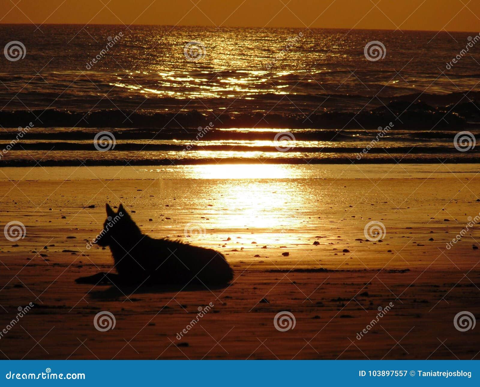 Hond bij het strand