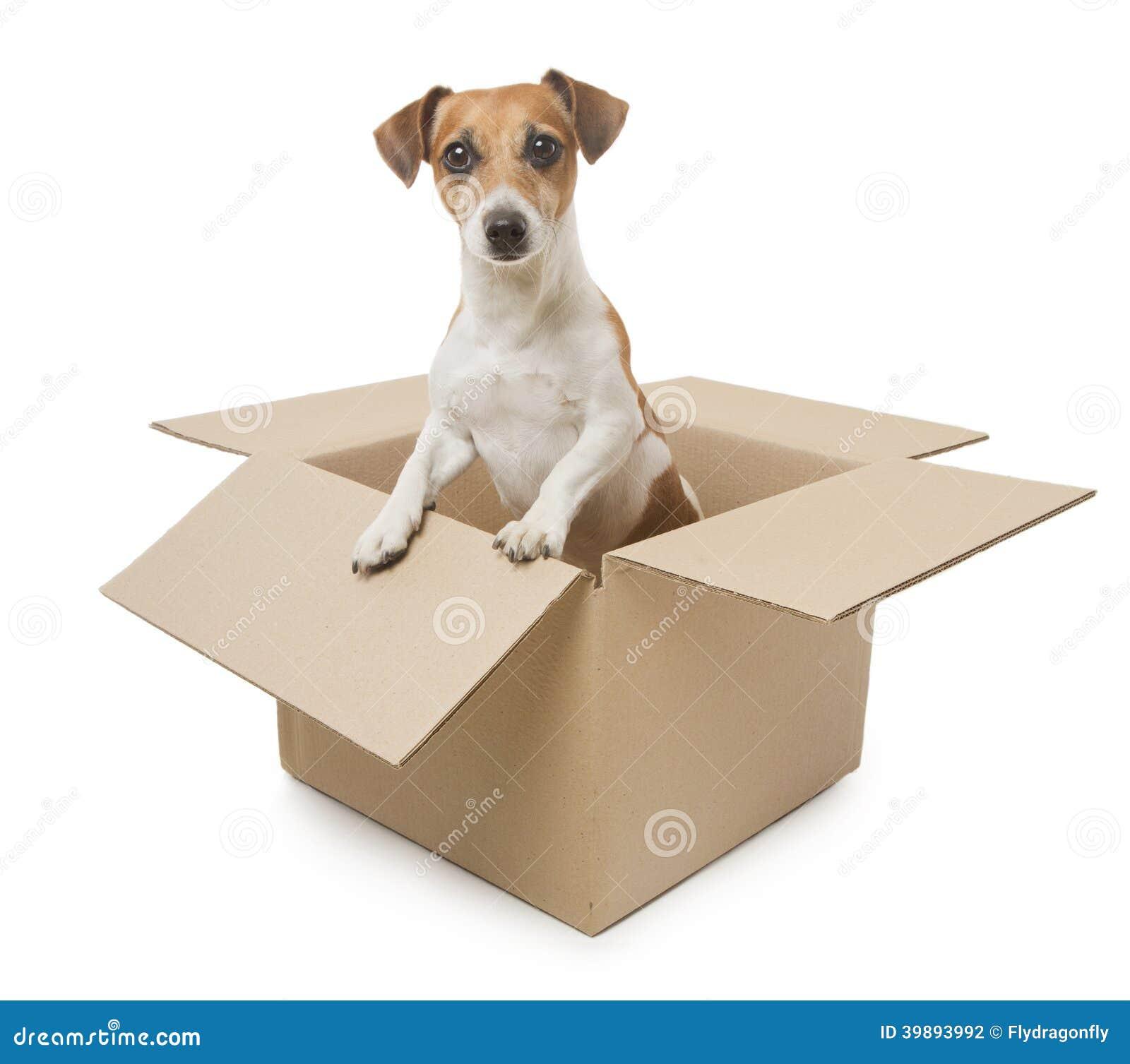 Dog Cat Subscription Box