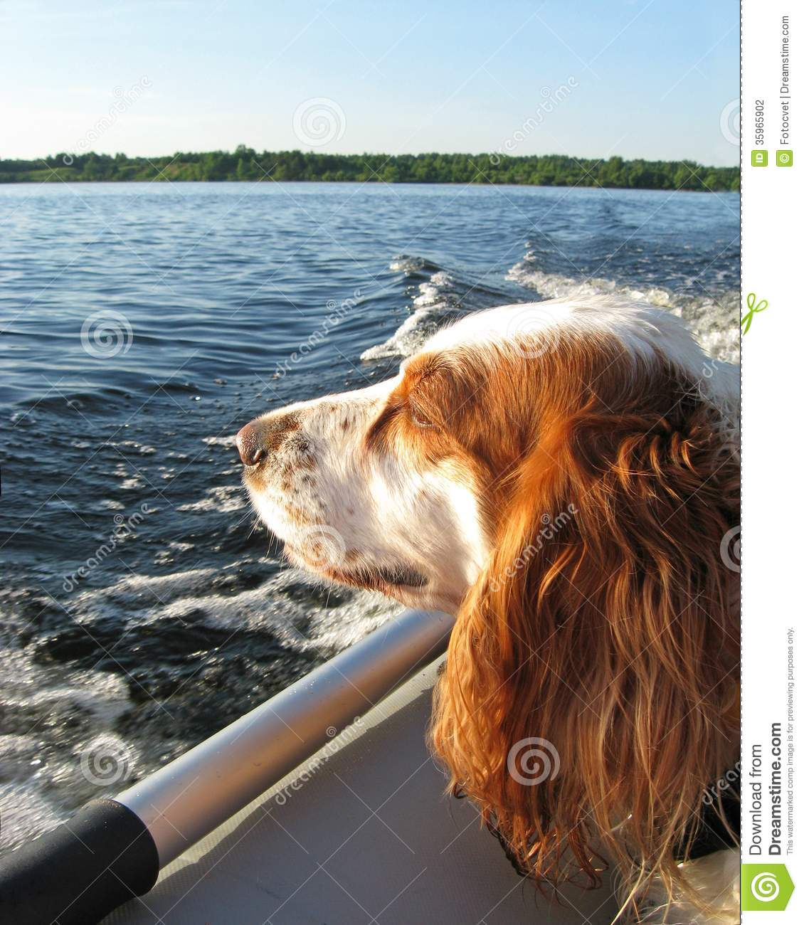 Hond in de boot