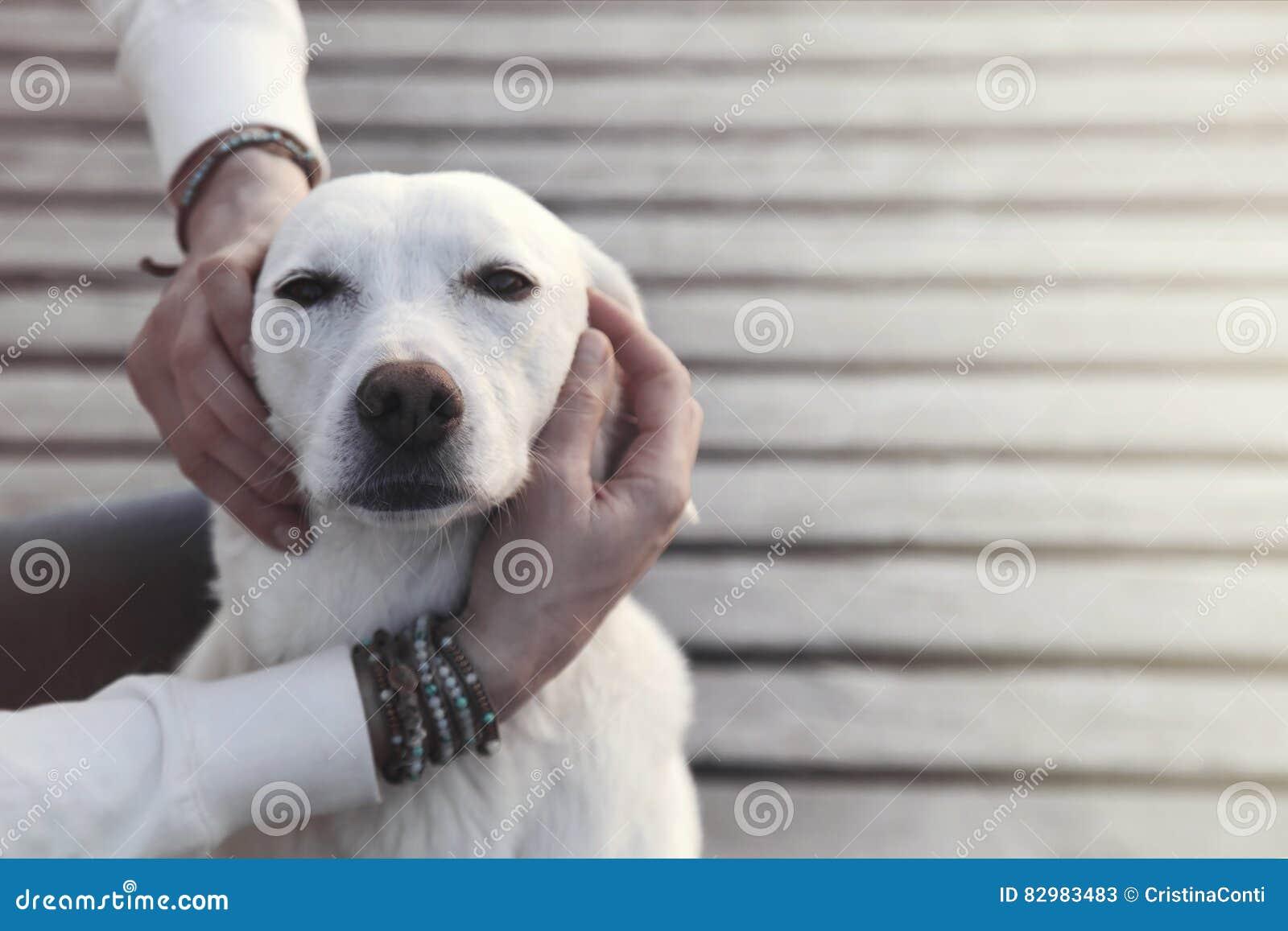 Hond in de greep van zijn eigenaar wordt verrukt die