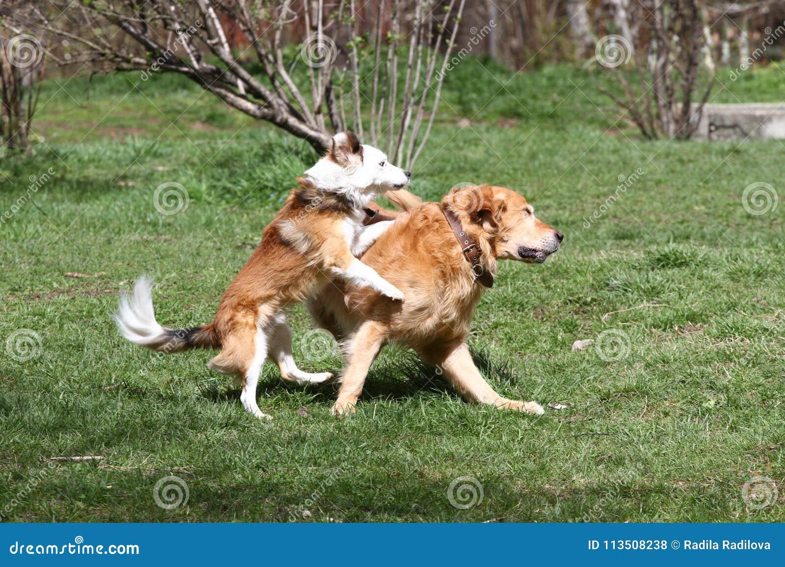 Hond De tijd van de lente en van de zomer Honden op een weide in aard op een daglicht in werking dat worden gesteld dat Gelukkige