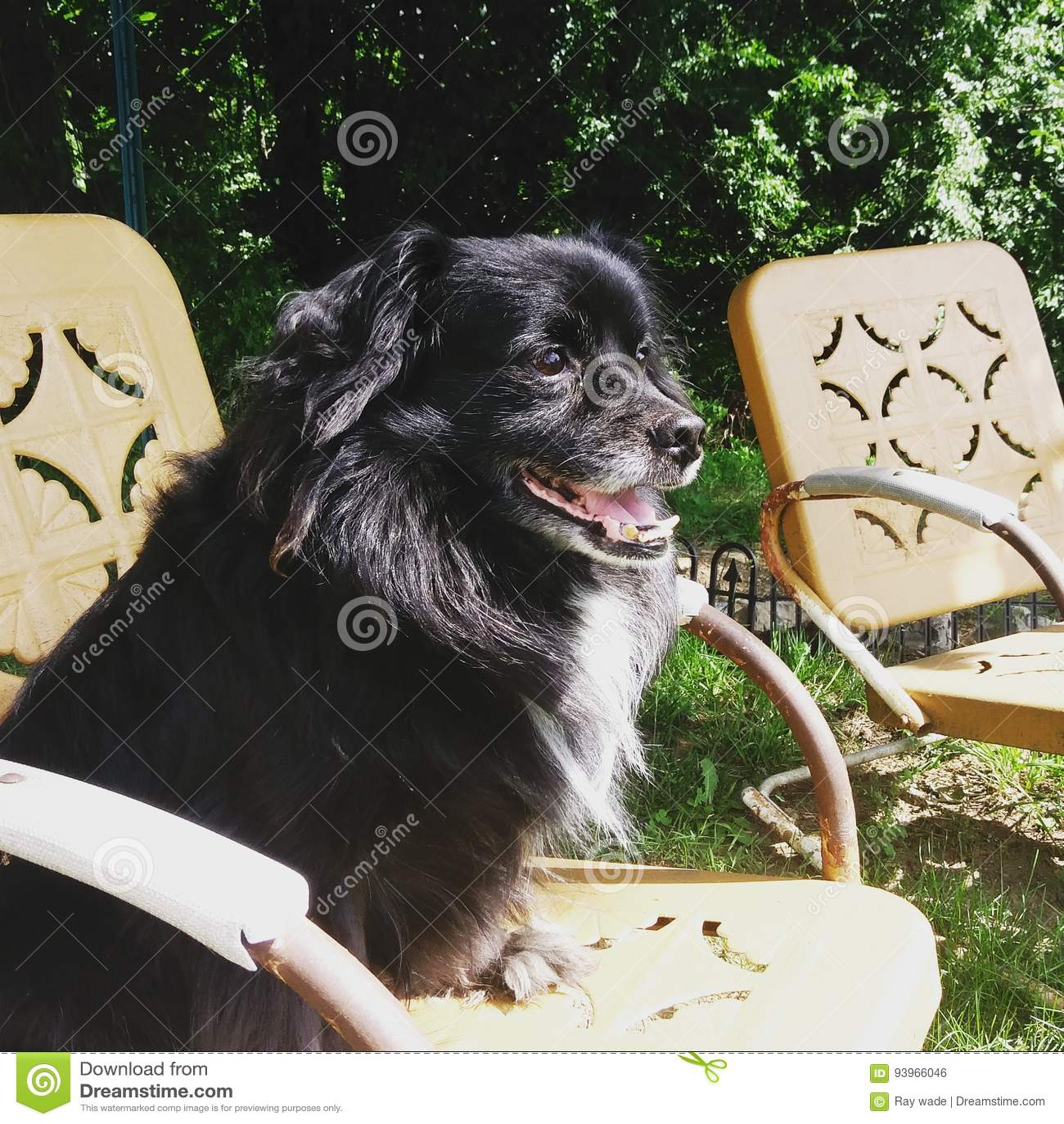 Hond in de zon