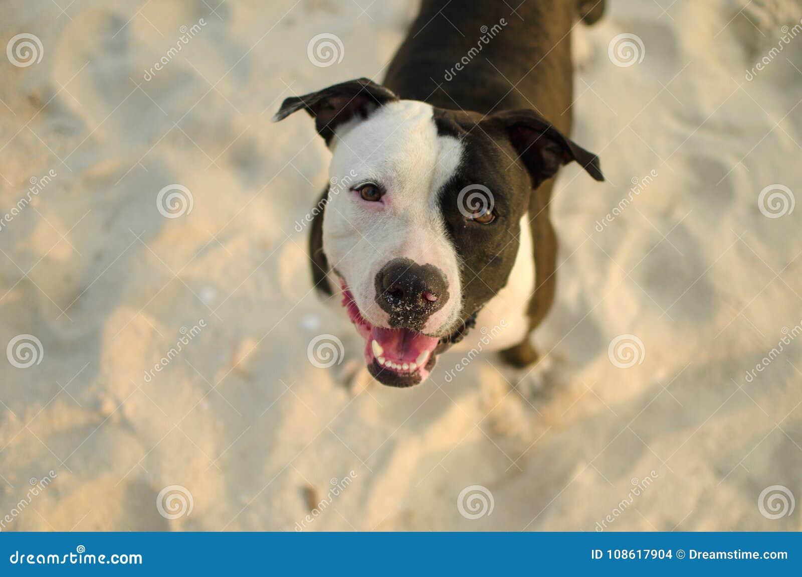Hond dichte omhooggaand in zand