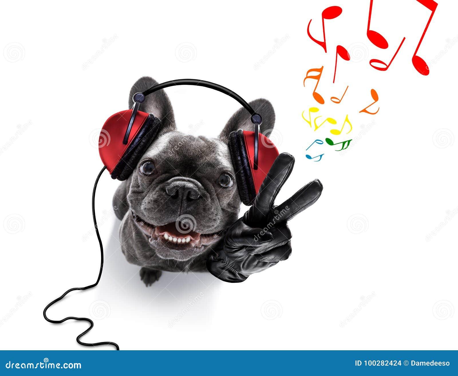 Hond die aan muziek luistert