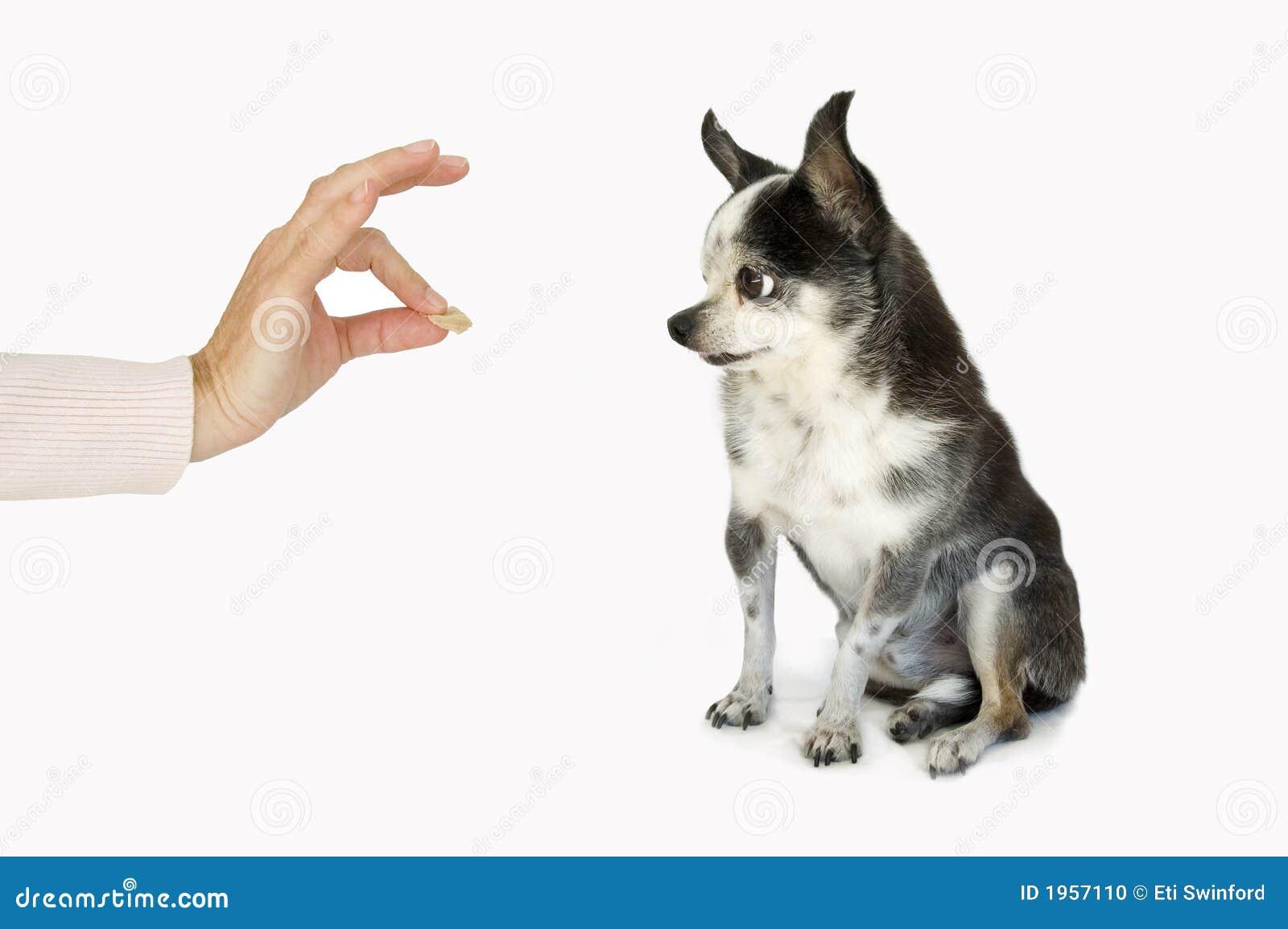 Hond die een traktatie neemt