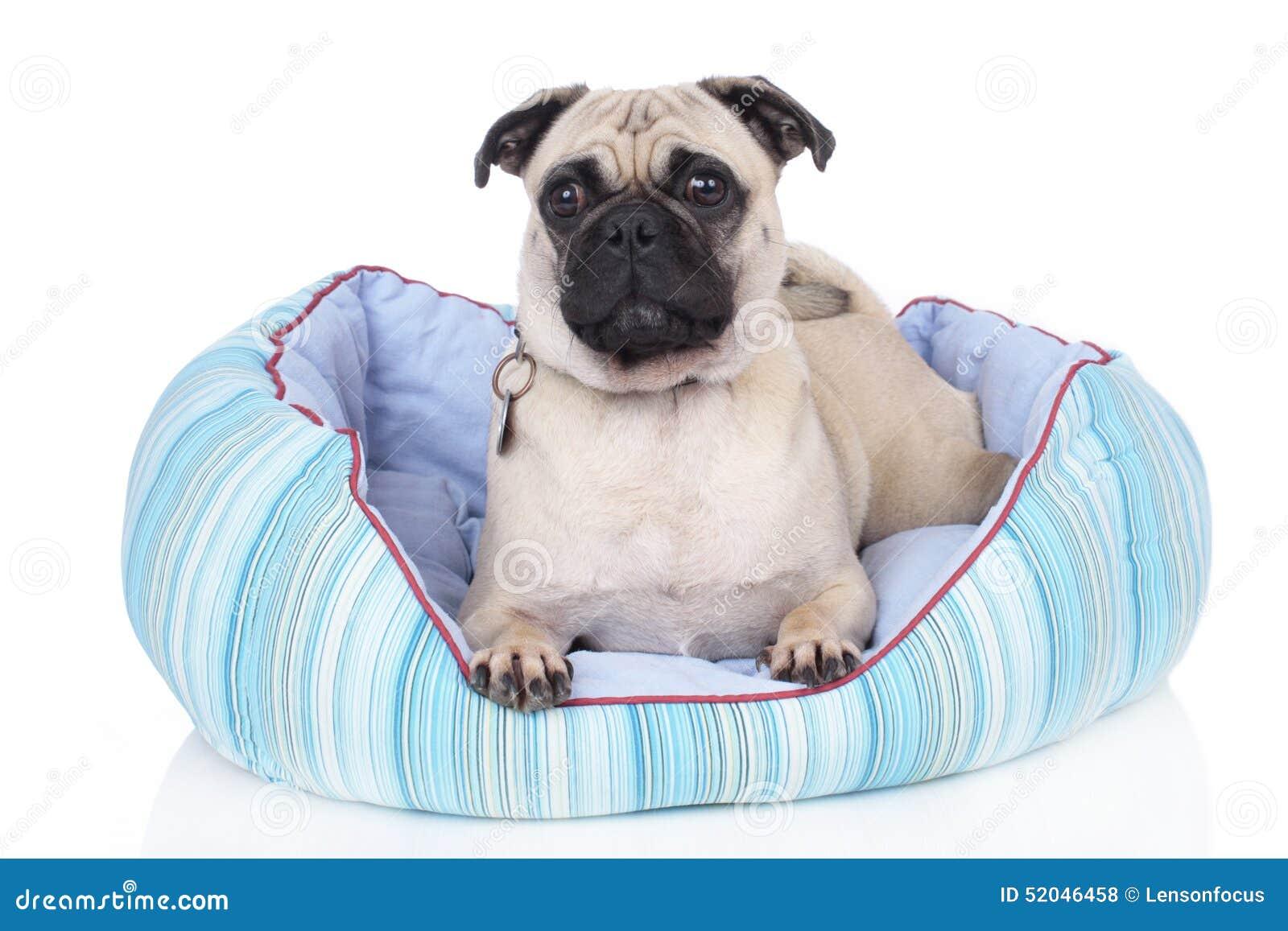 Hond die in hondbed liggen