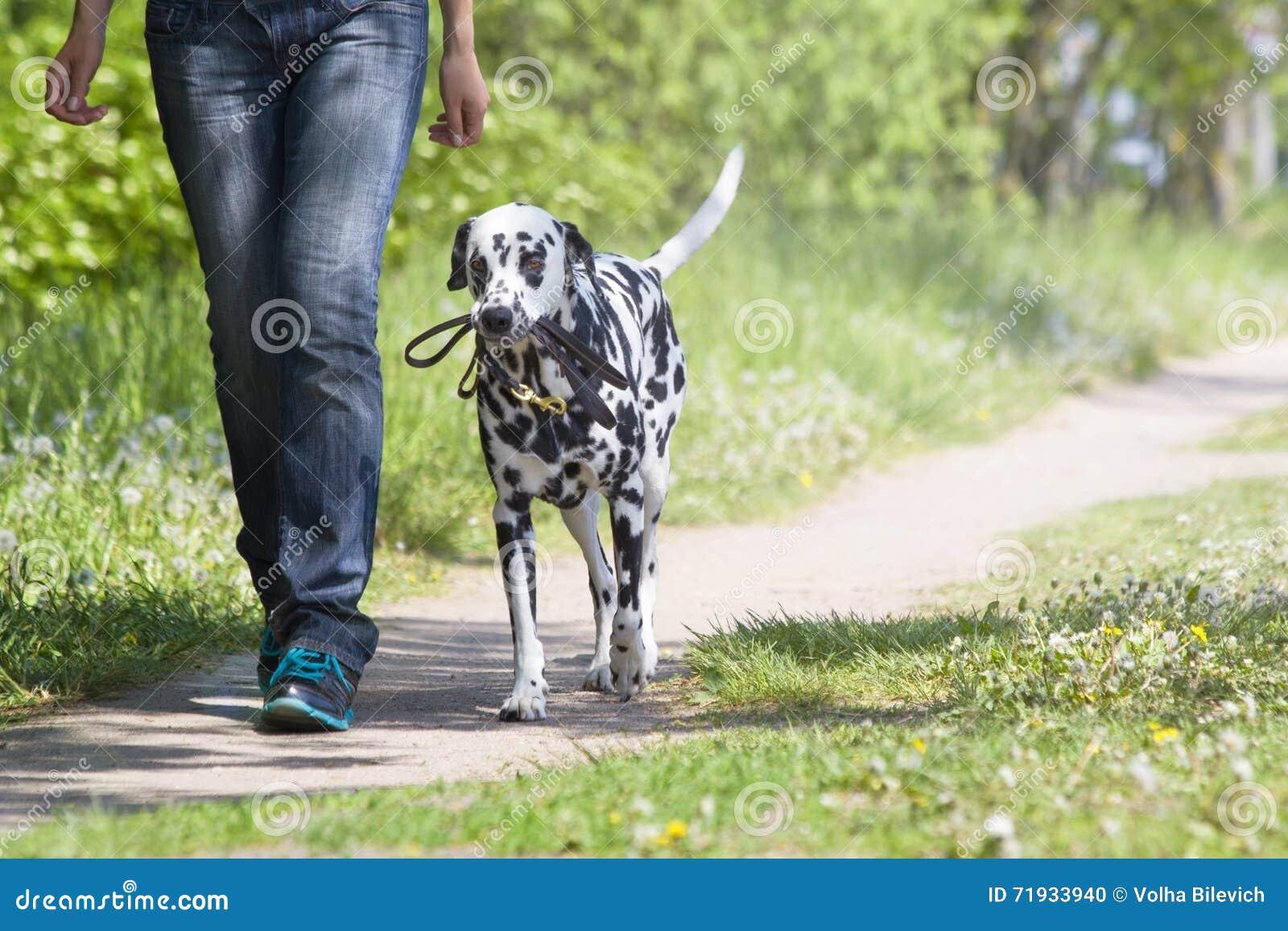 Hond die met de eigenaar lopen