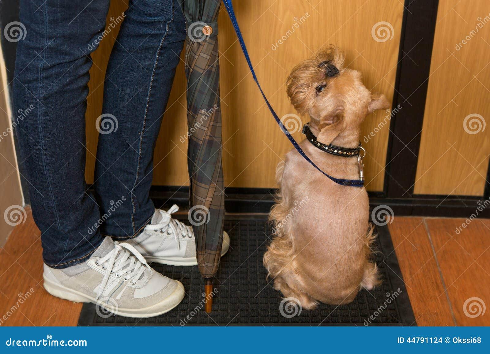 Hond die op een gang wachten stock foto afbeelding bestaande uit