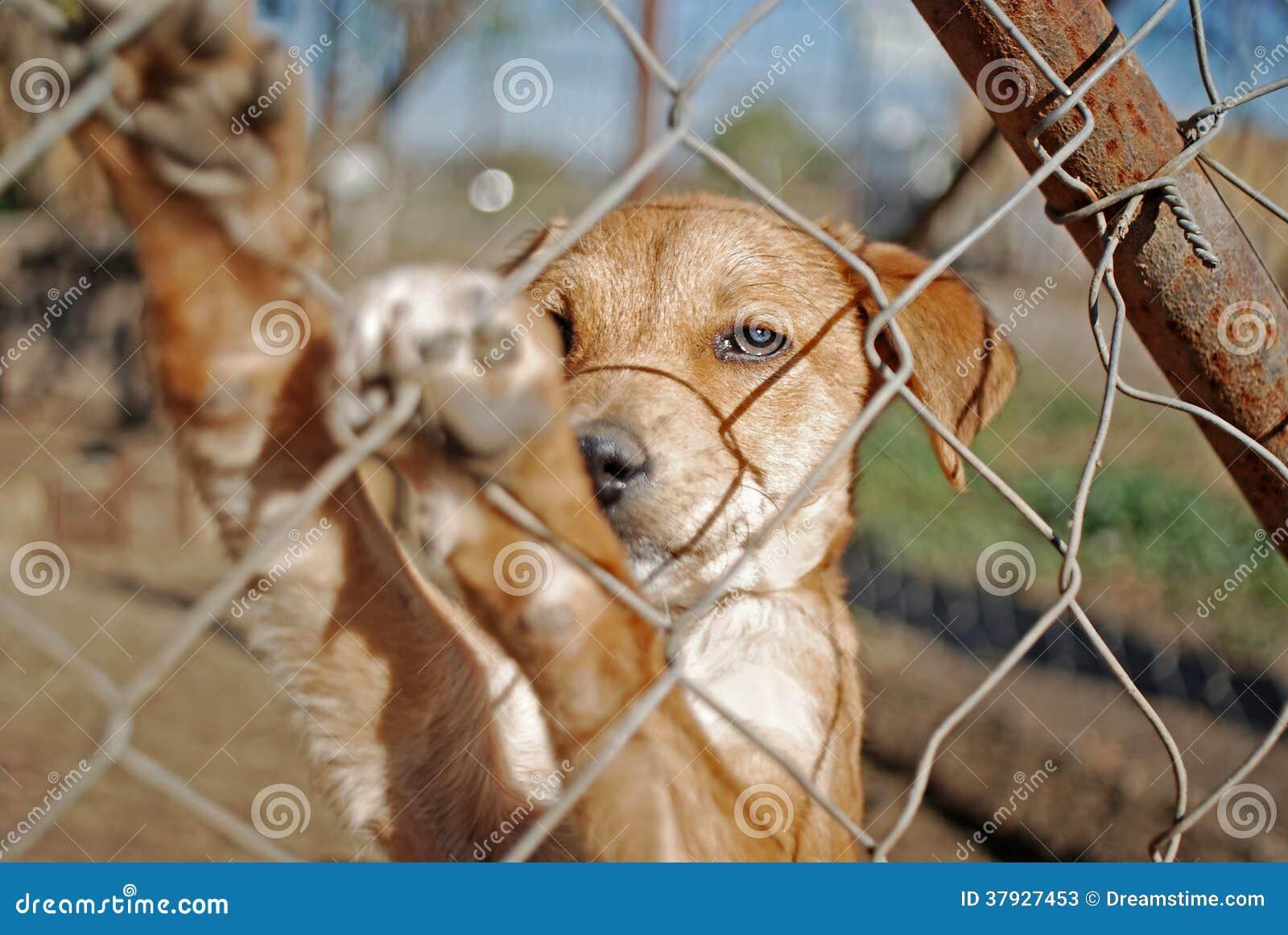 Hond die op goedkeuring wachten