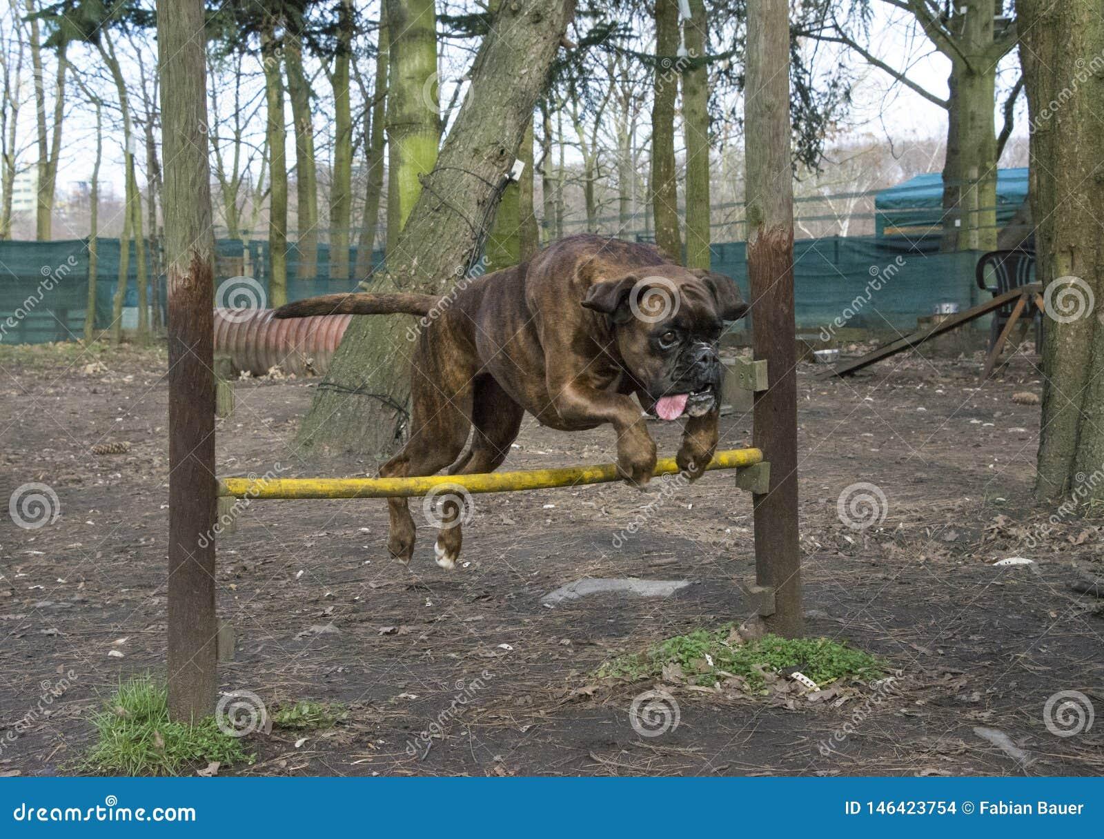 Hond die over een omheining springen