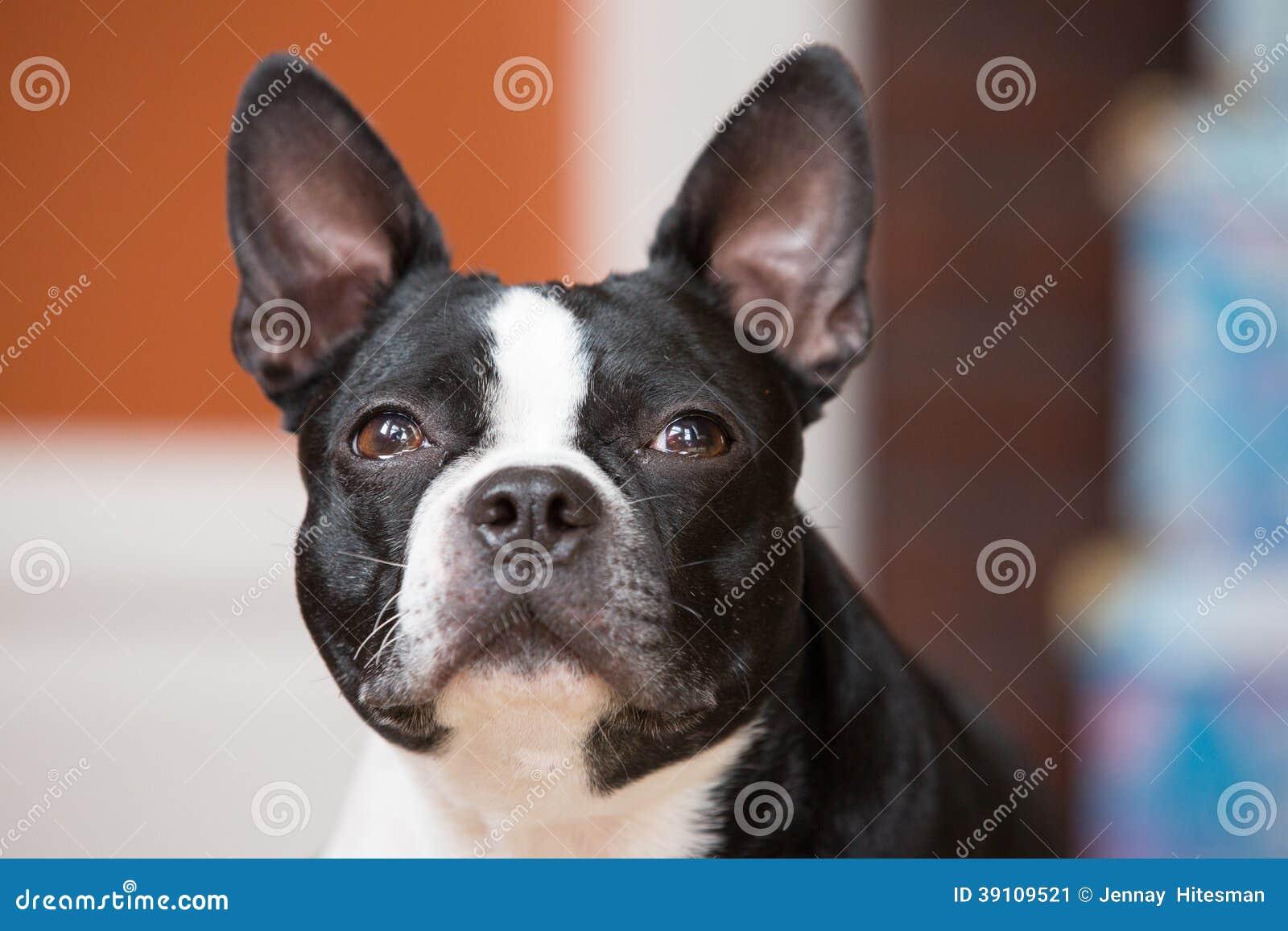 Hond die vooruit eruit zien