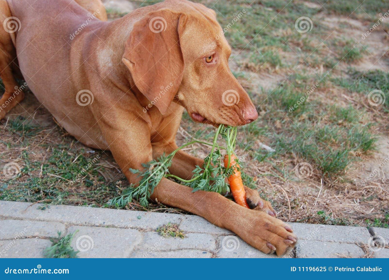 Hond die wortel eet