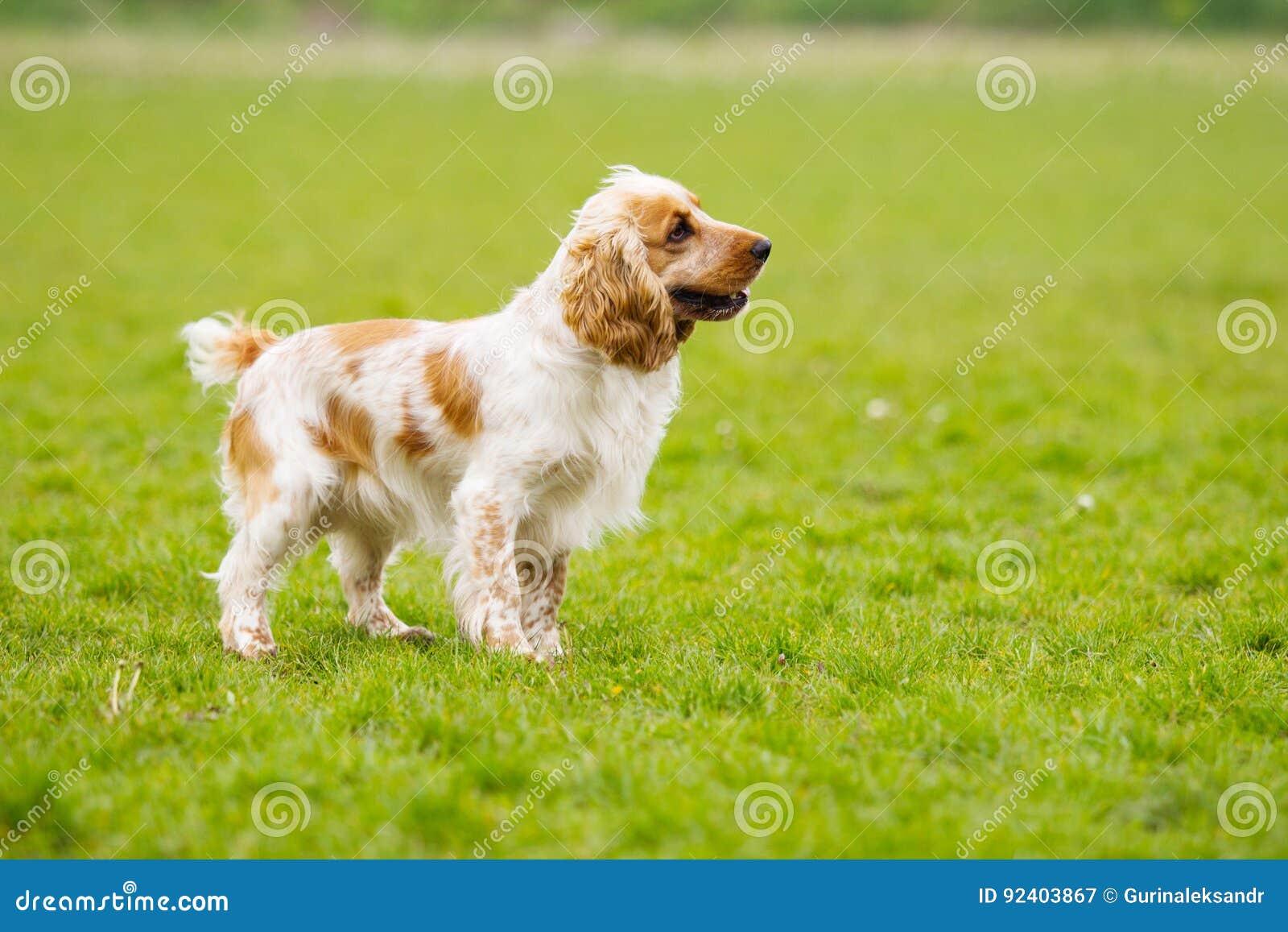 Hond die zijdelings eruit zien