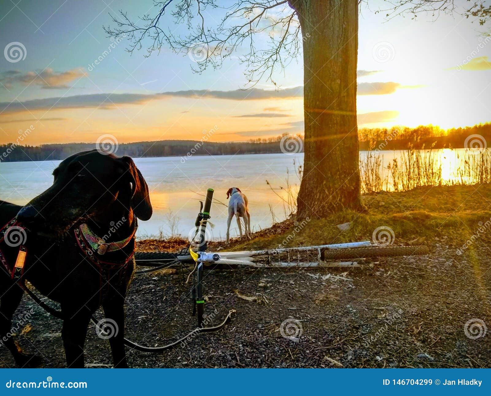 Hond en autoped dichtbij het meer
