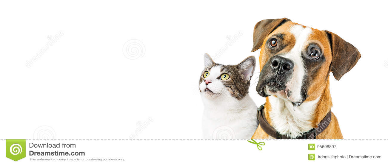 Hond en Cat Together op Witte Horizontale Banner