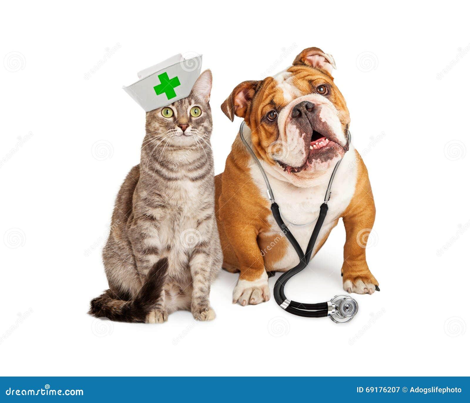 Hond en Cat Veterinarian en Verpleegster