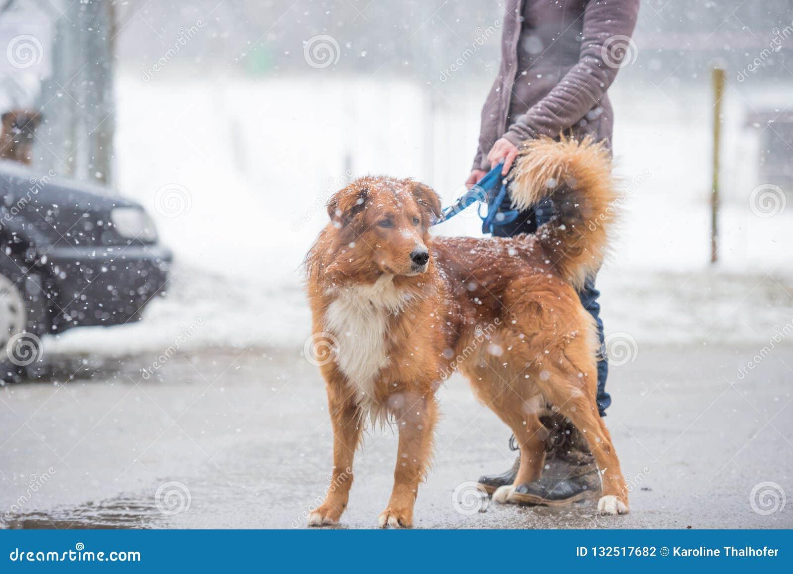Hond en eigenaargang in de stad in de winter