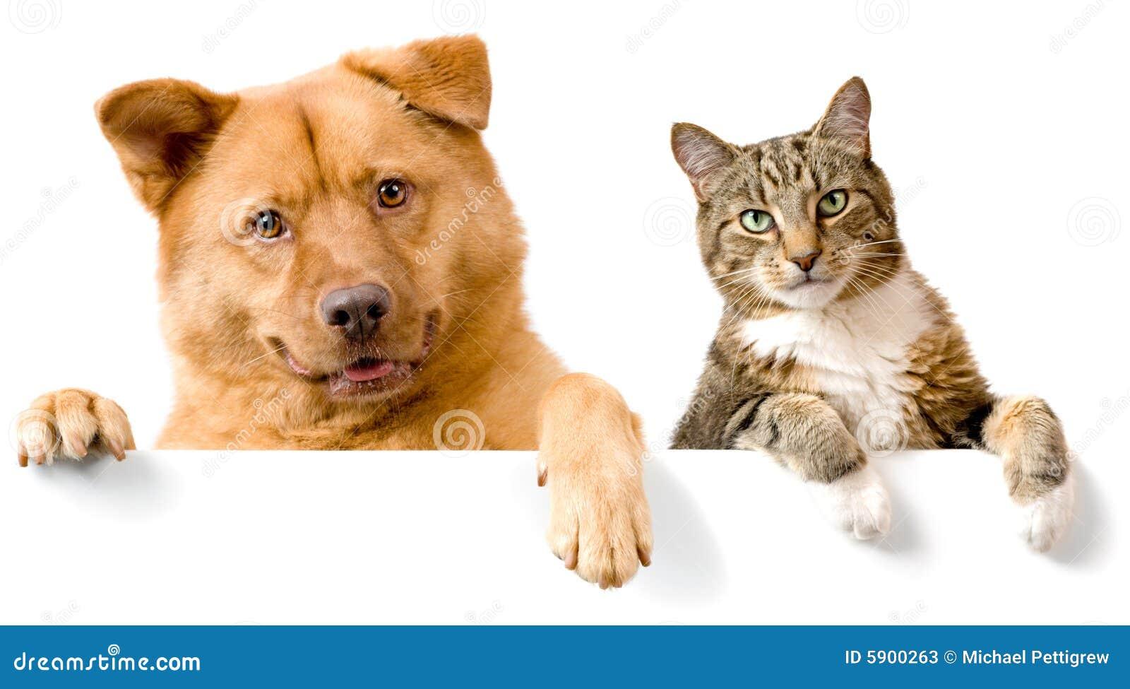 Hond en Kat boven witte banner