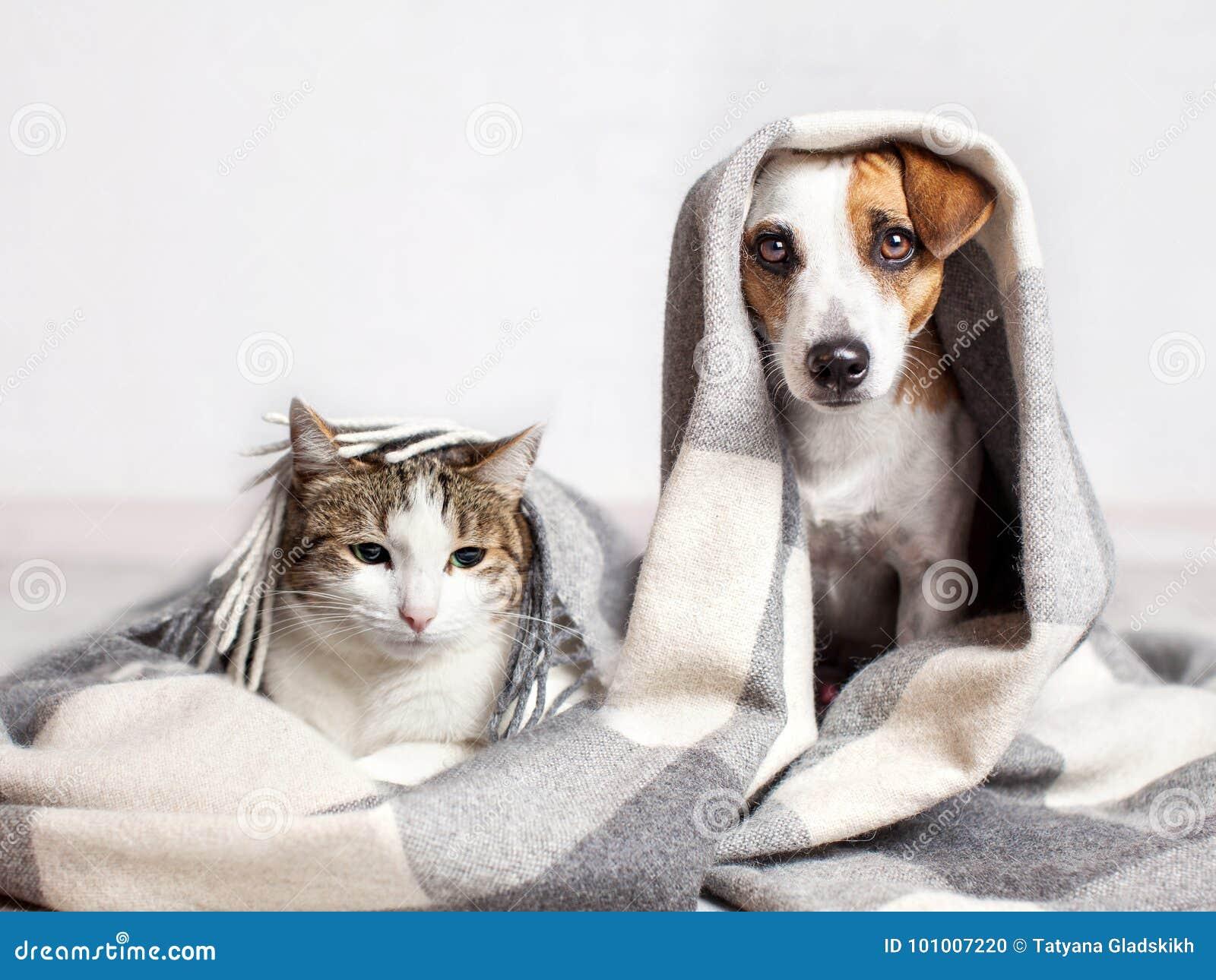 Hond en kat onder een plaid