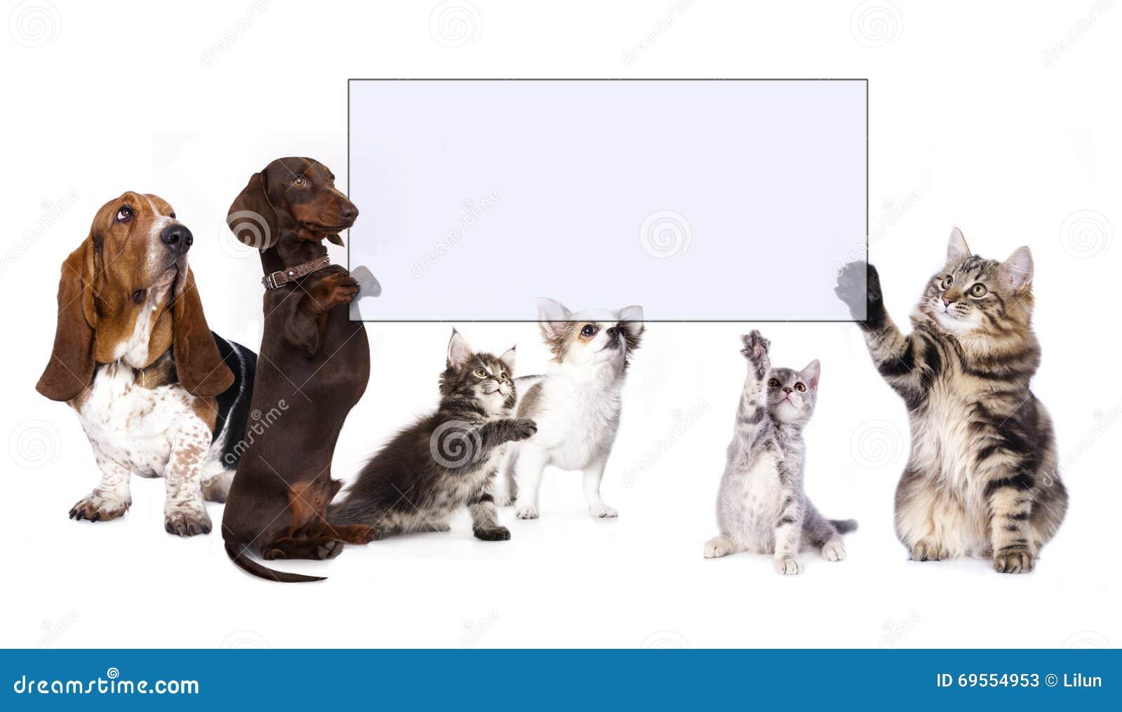 Hond en kattenpoten die banner houden