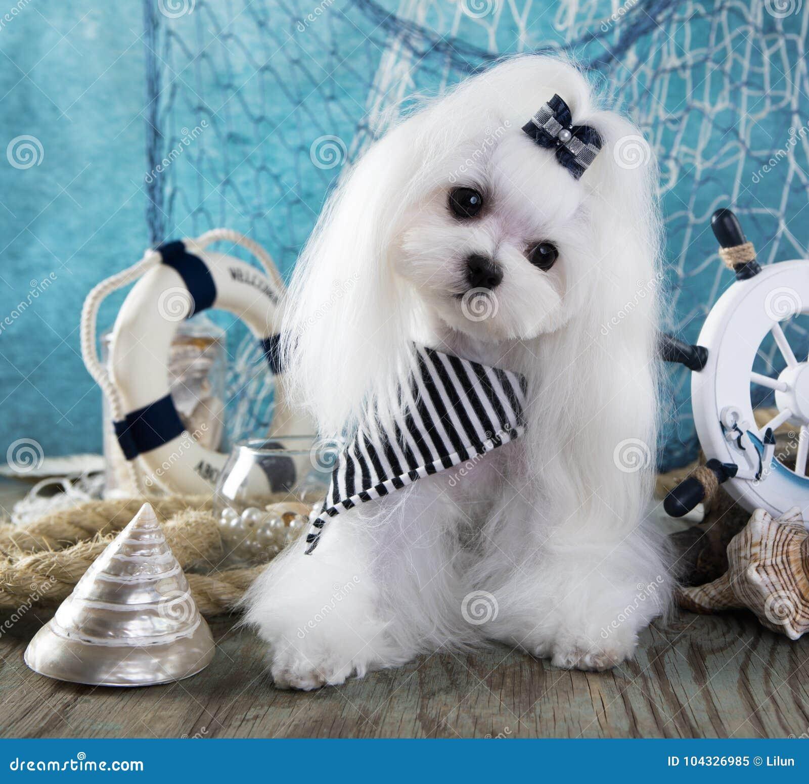 Hond en overzeese decoratie