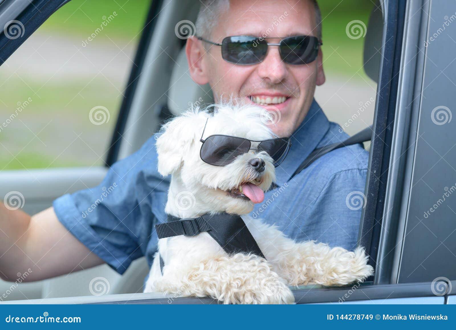 Hond en zijn eigenaar die in een auto reizen