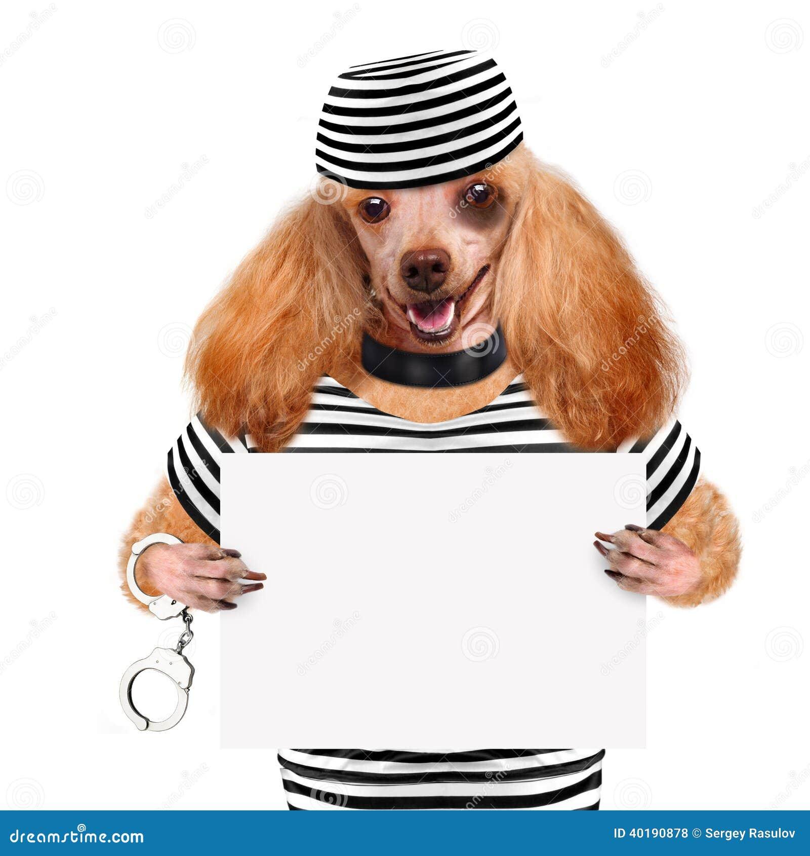 Hond in gevangenis.