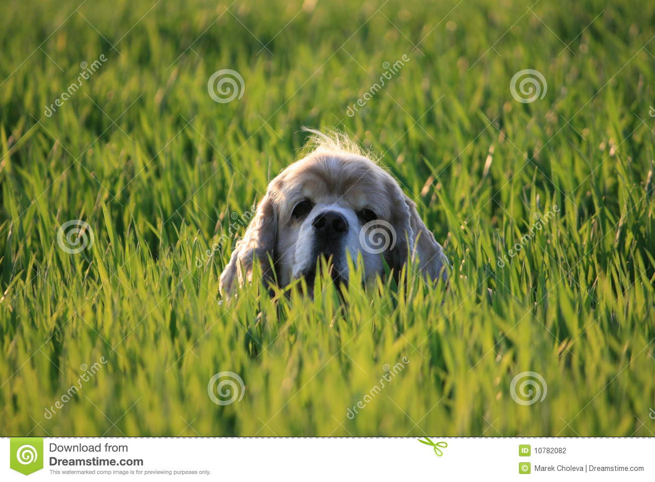Hond in gras