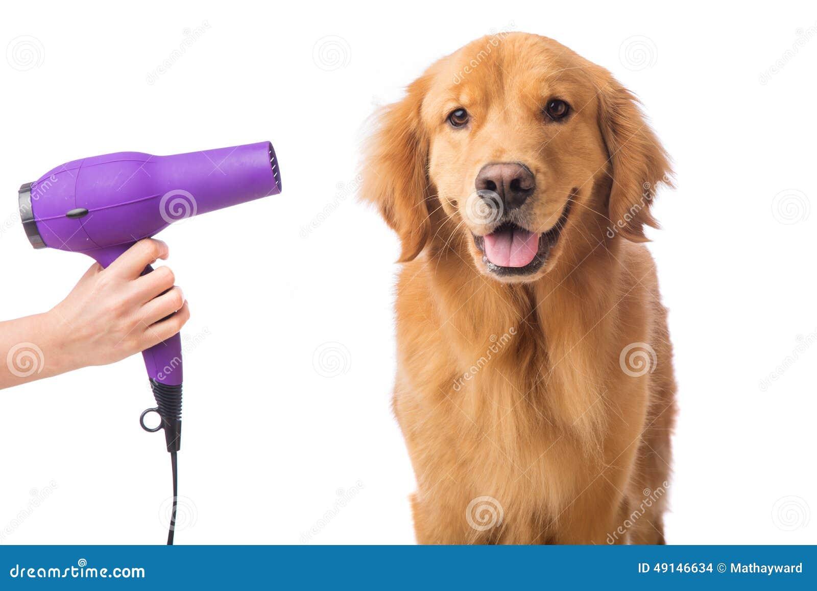 Hond Groomer