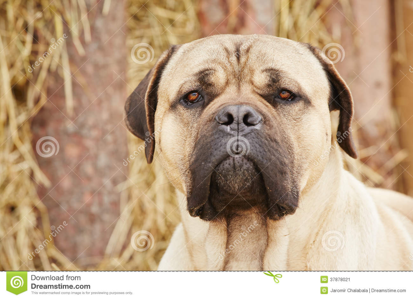 Hond in het landbouwbedrijf