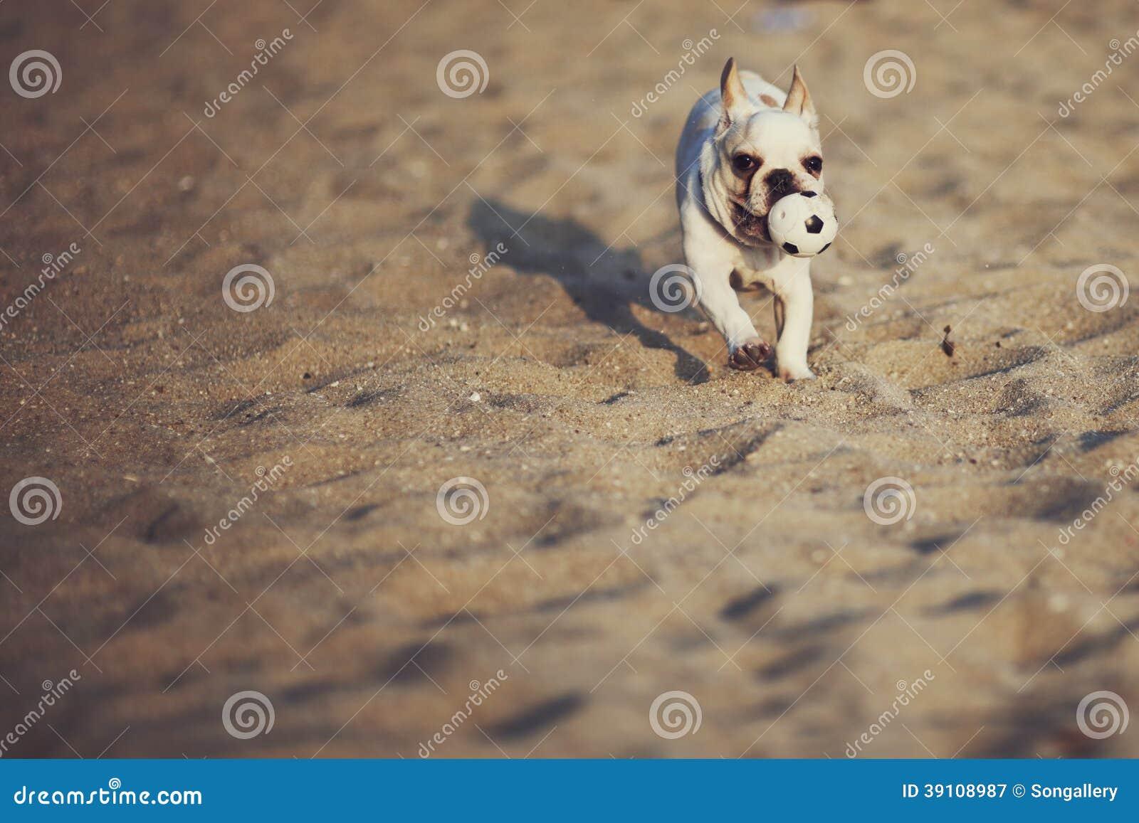 Hond het spelen bal
