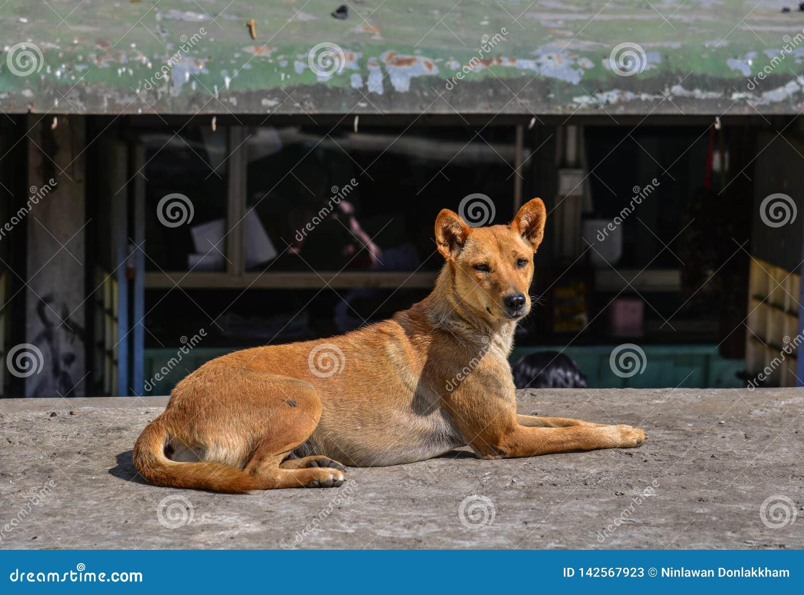 Hond het spelen op straat bij kleine stad