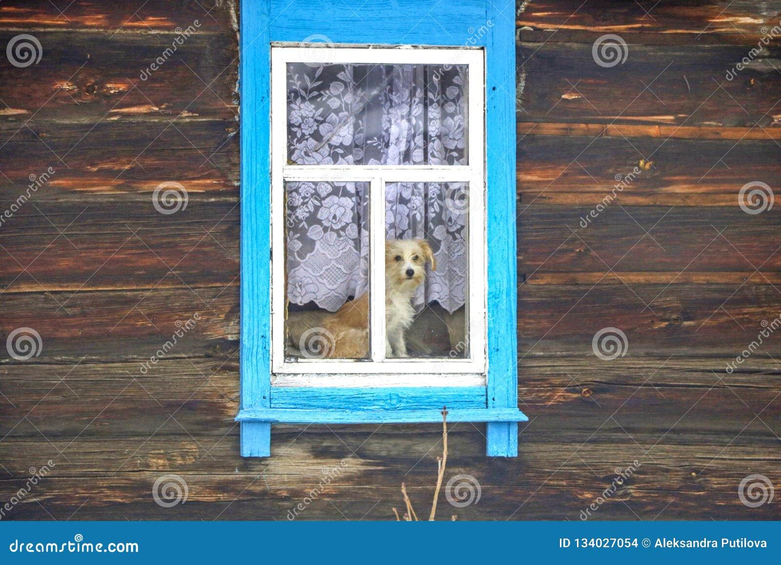 Hond in het venster van een blokhuis