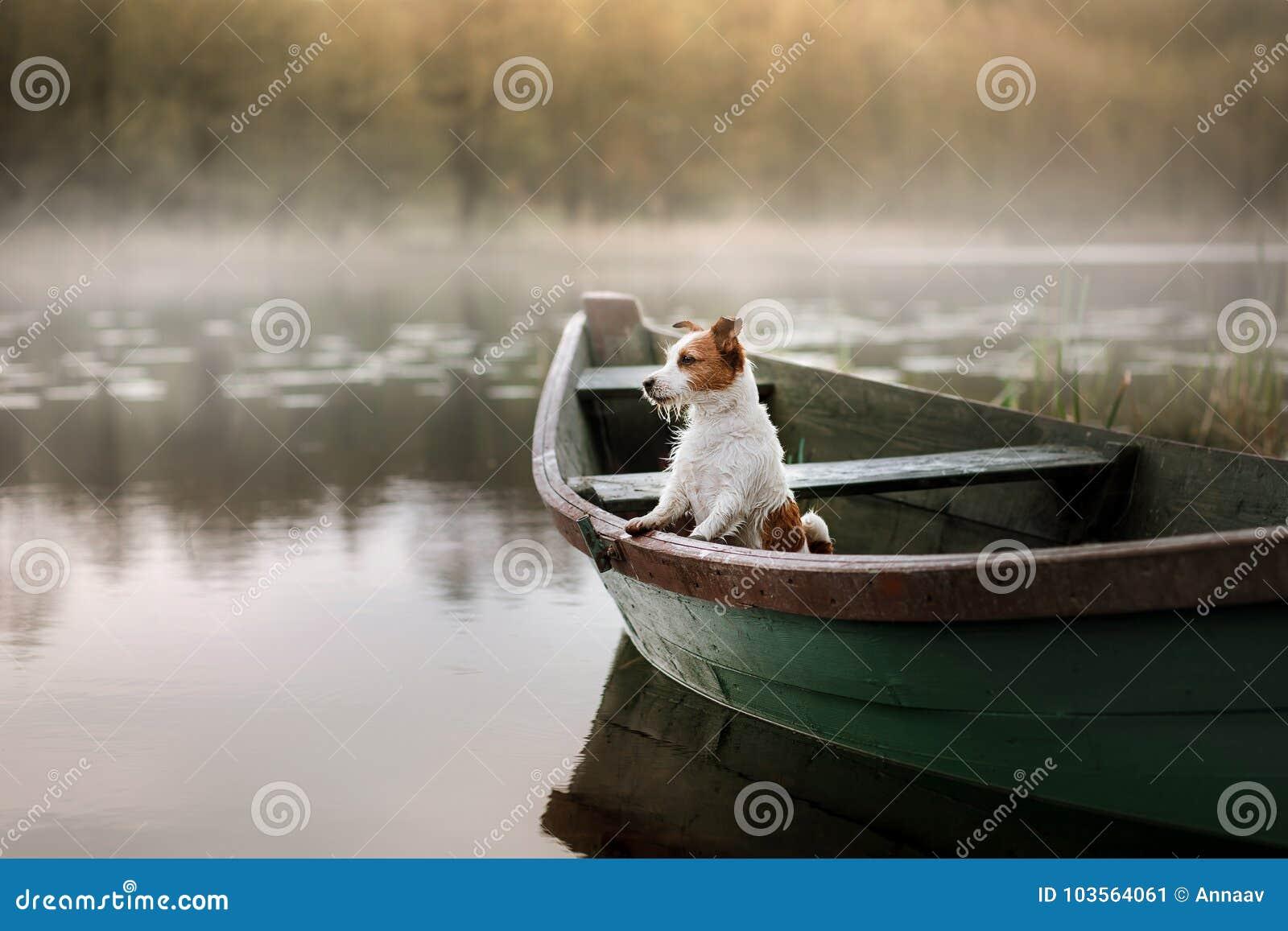 Hond Jack Russell Terrier in een boot