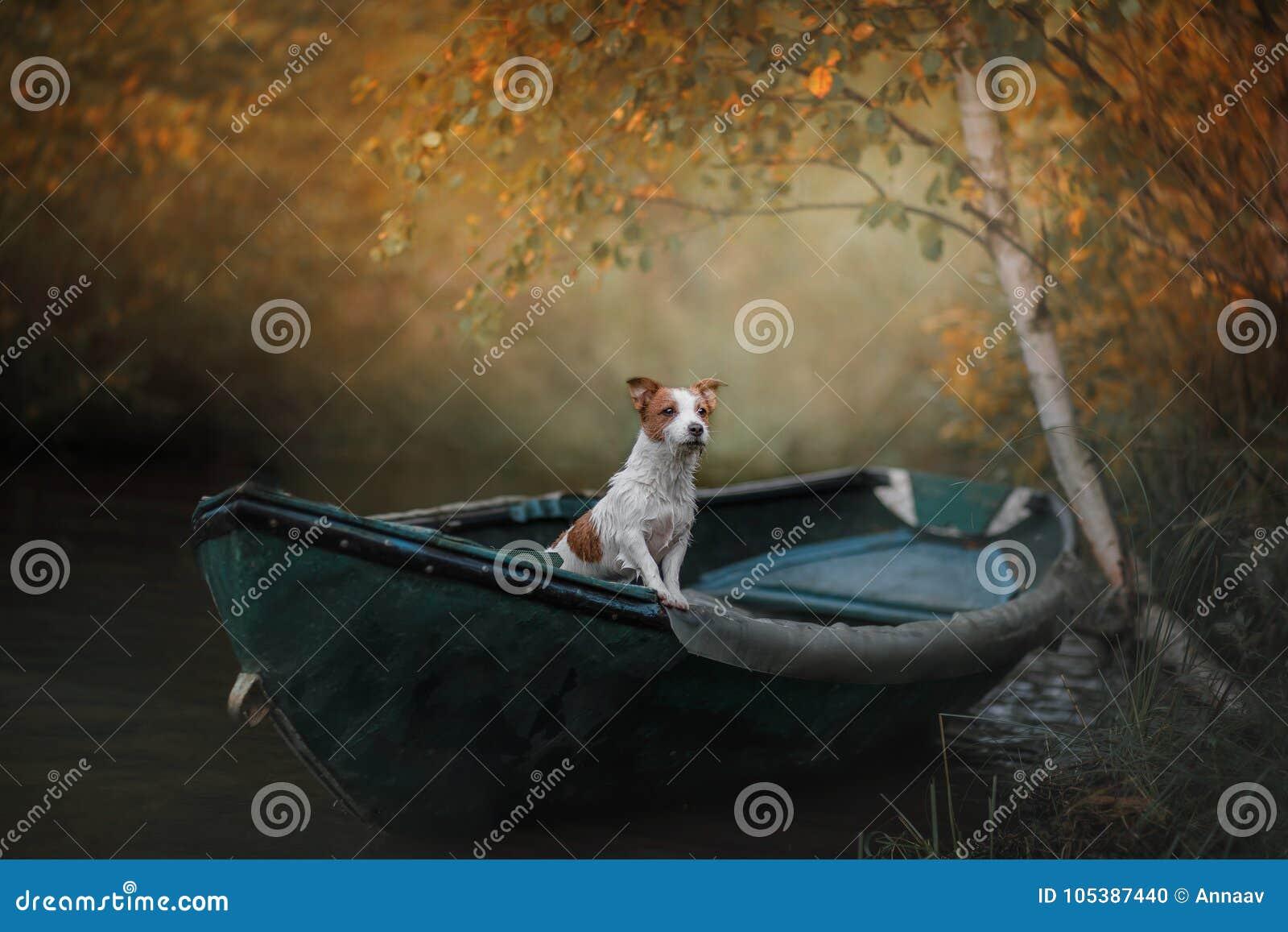 Hond Jack Russell Terrier in een boot op het water