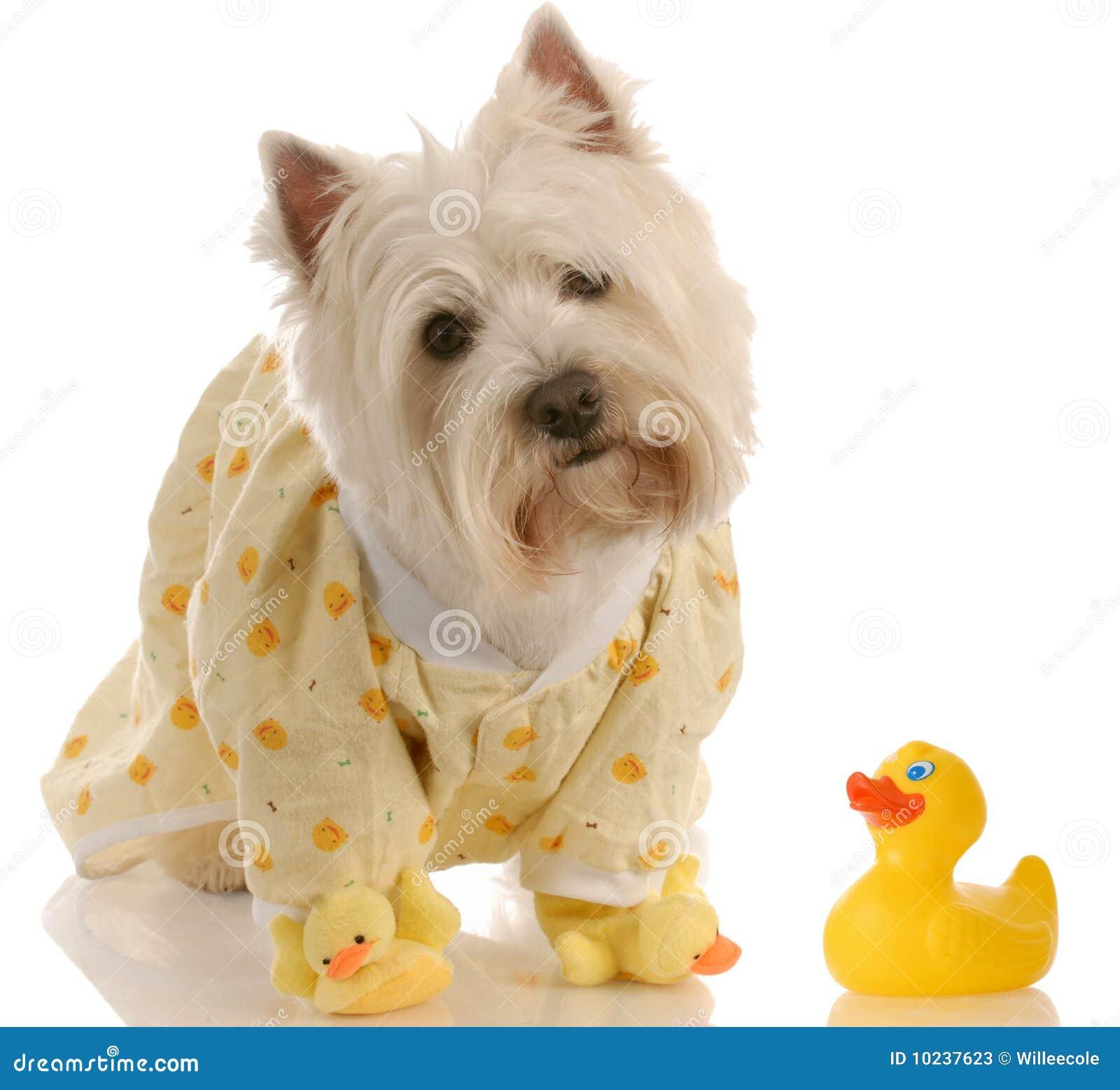 Hond klaar voor een bad